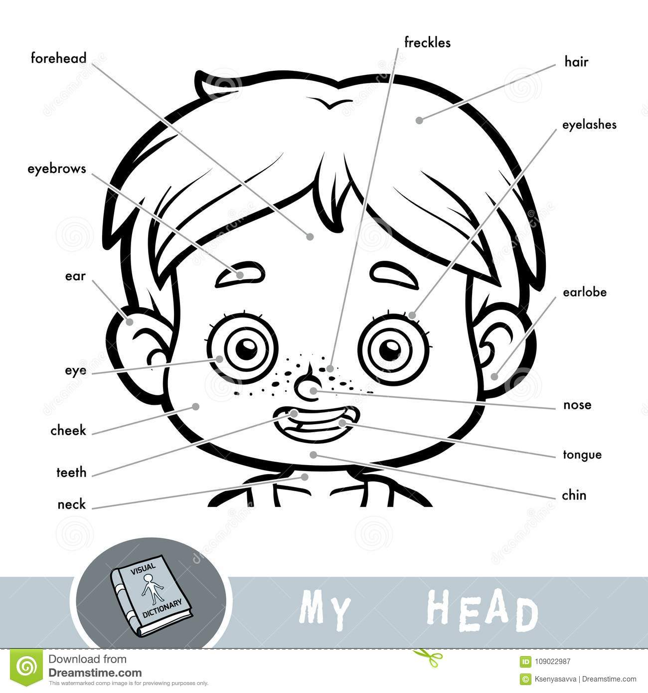 Visual Dictionary About The Human Body  My Head Parts For A