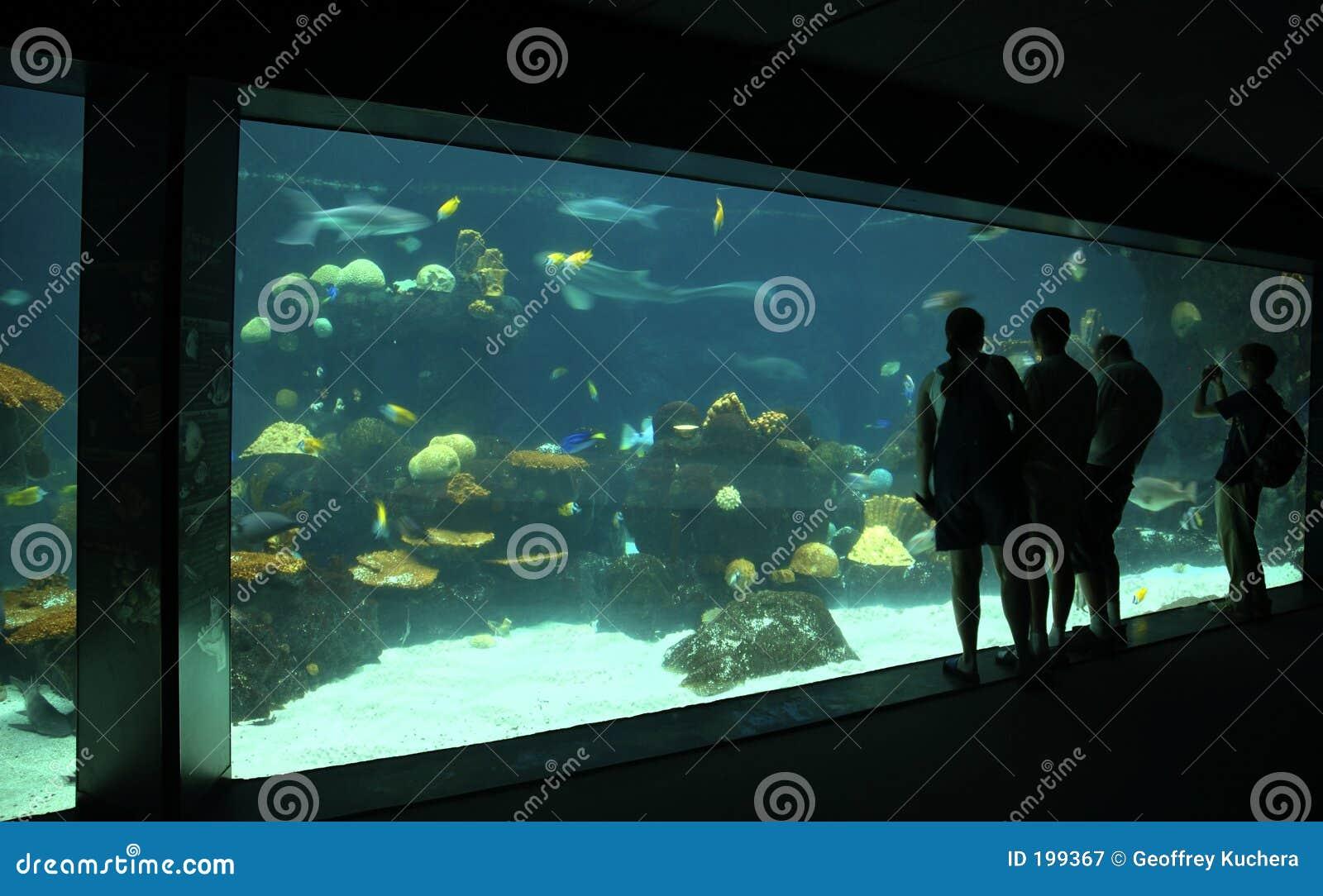 Visualisateurs d aquarium
