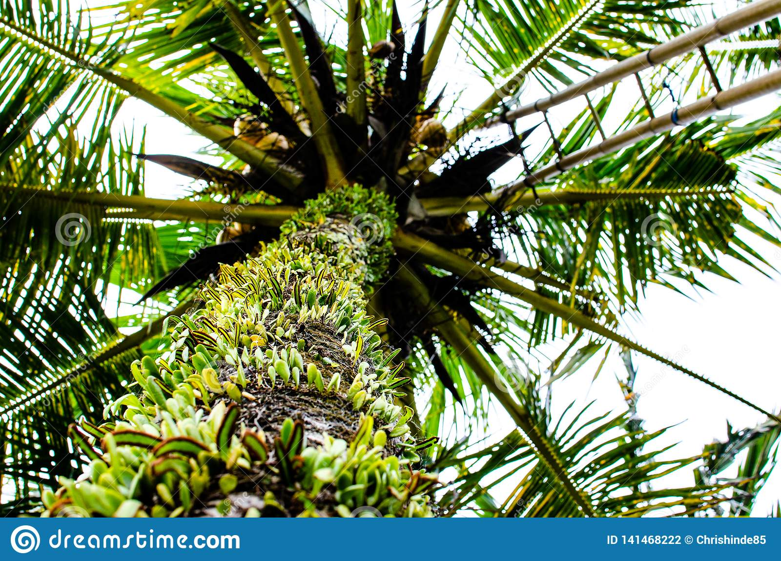Visualizzazione ad albero della palma