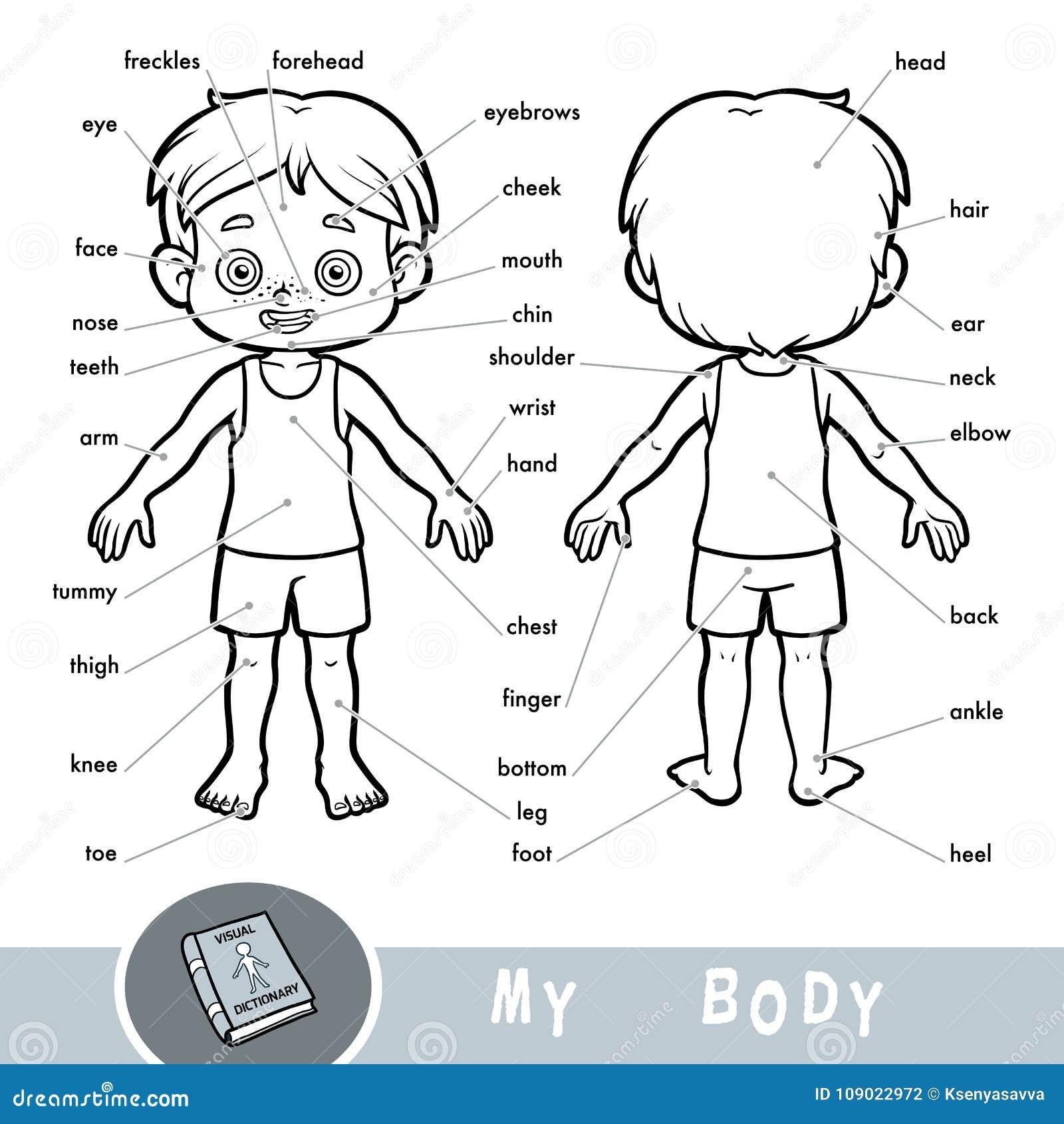 Visuell ordbok om människokroppen Mina kroppsdelar för en pojke
