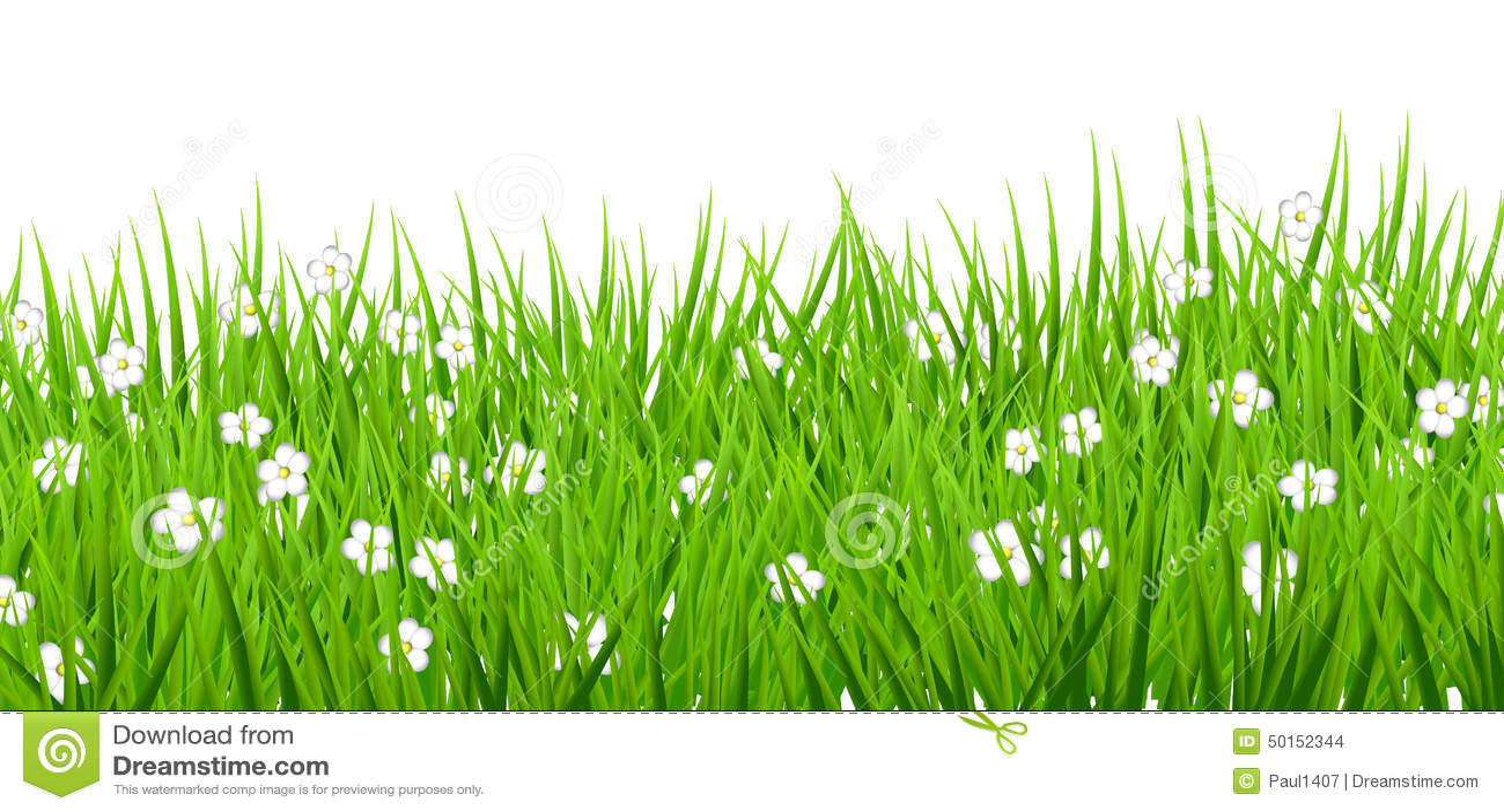 Vit bakgrund blommar grönt gräs för tusenskönor