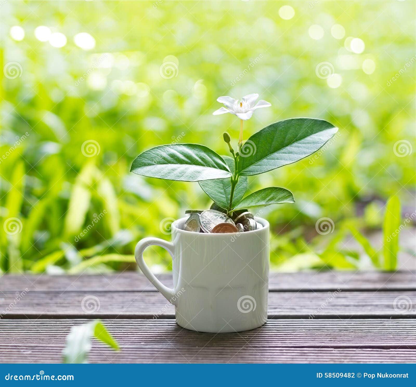 Vit blomma och grön växt som växer ut ur mynt i vit på naturen