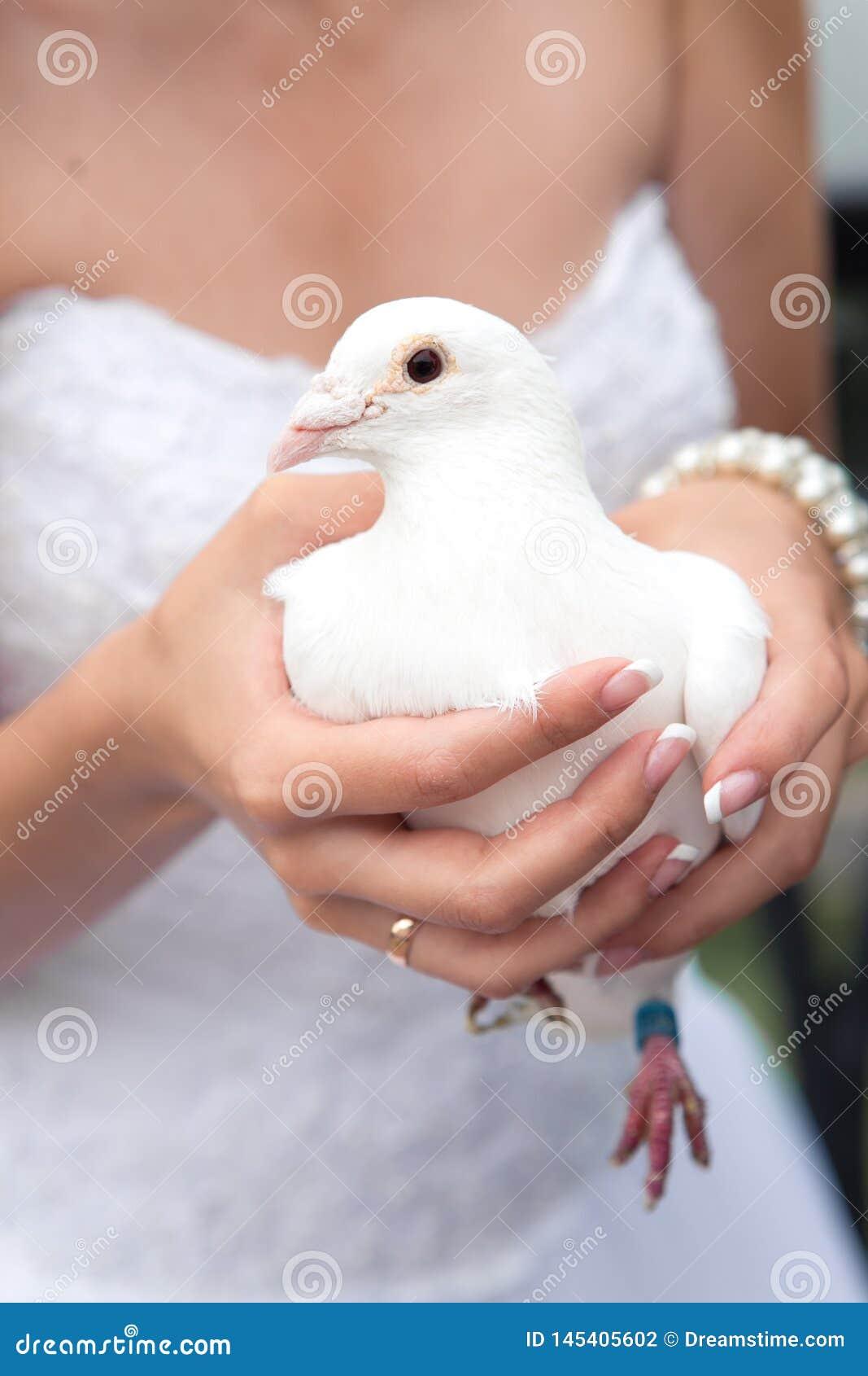 Vit duva i händerna av bruden