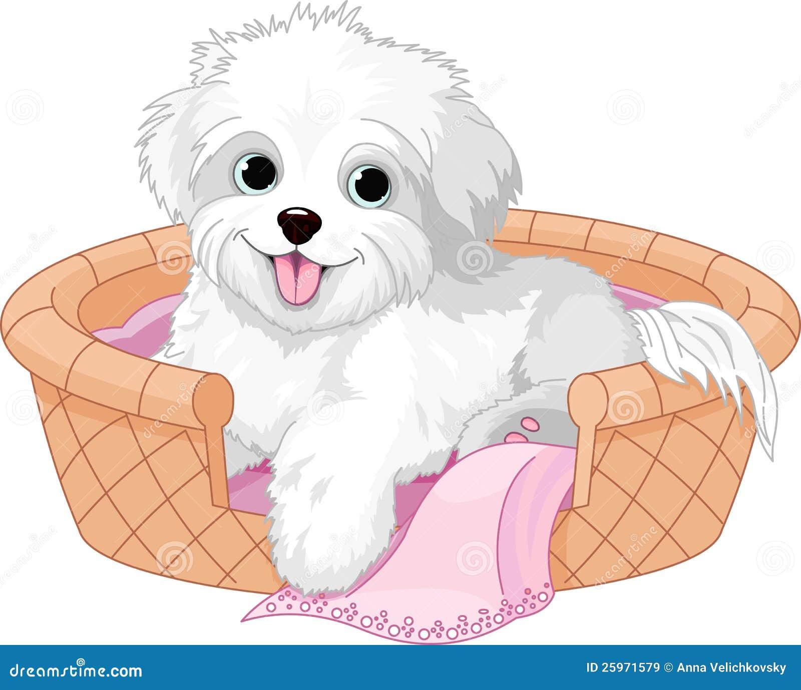Vit fluffig hund