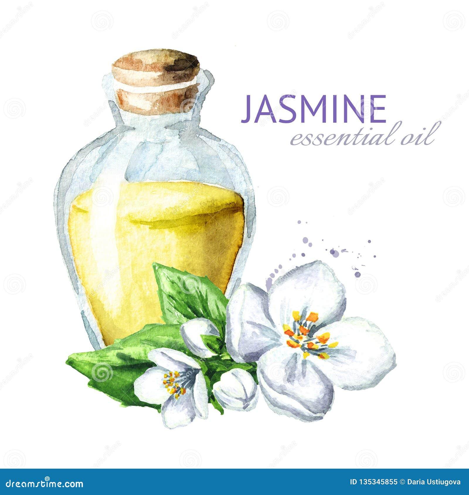 Vit jasminblomma och nödvändig olja aromatherapy brunnsort Dragen illustration för vattenfärg som hand isoleras på vit bakgrund