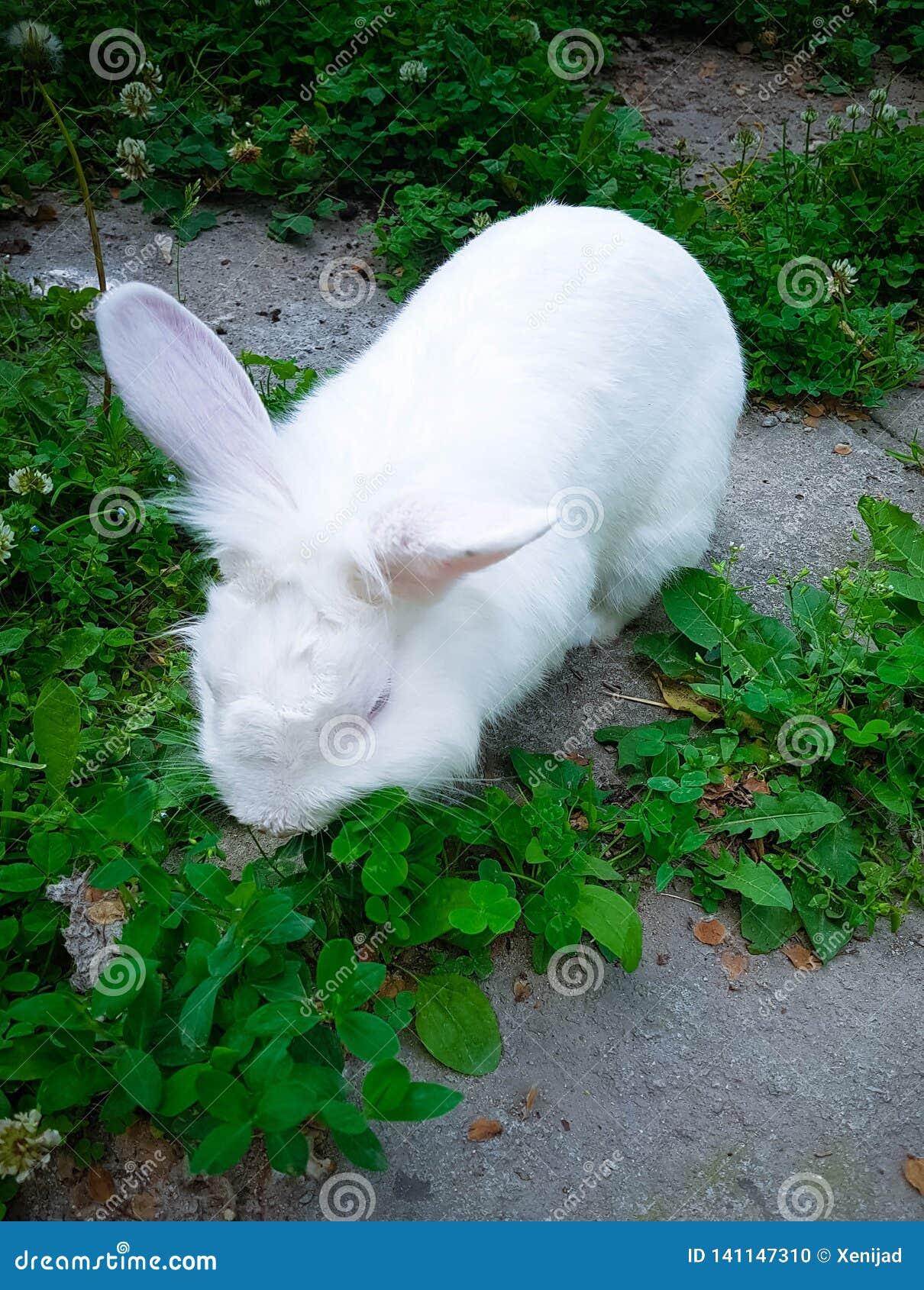 Vit kanin som äter gräs på stadsträdgården