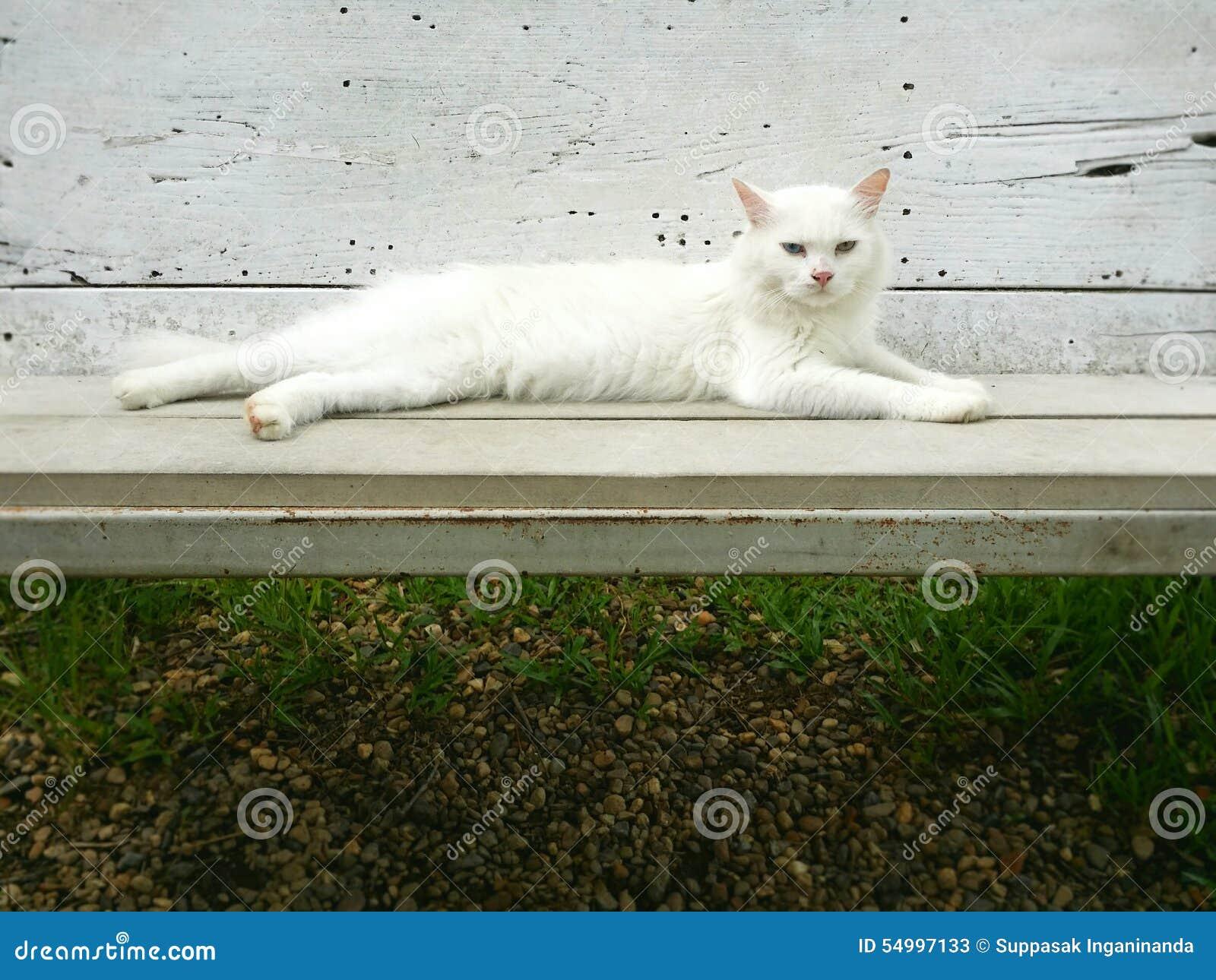 Vit katt på bänken