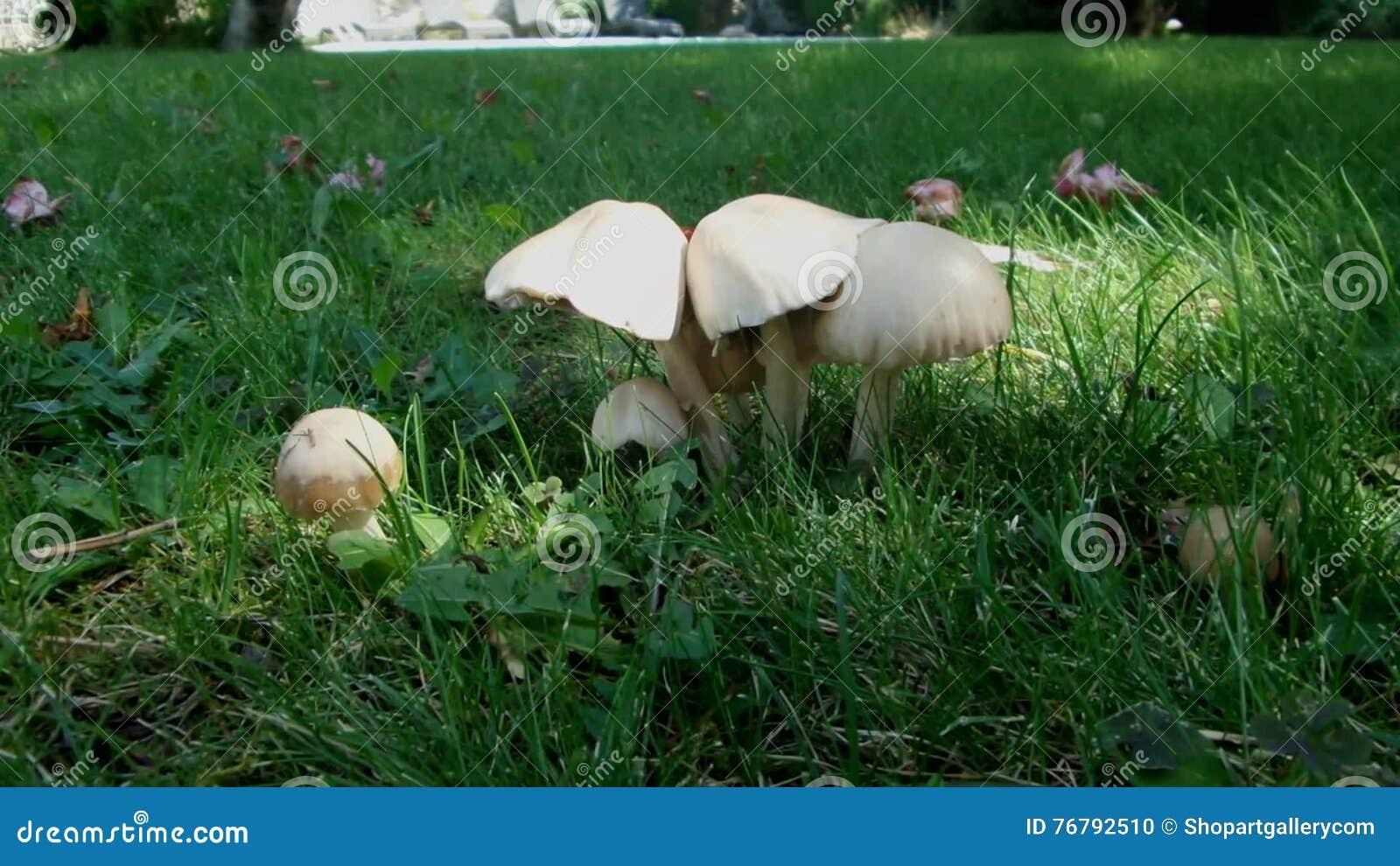 recipe: svampar i gräsmattan bilder [19]