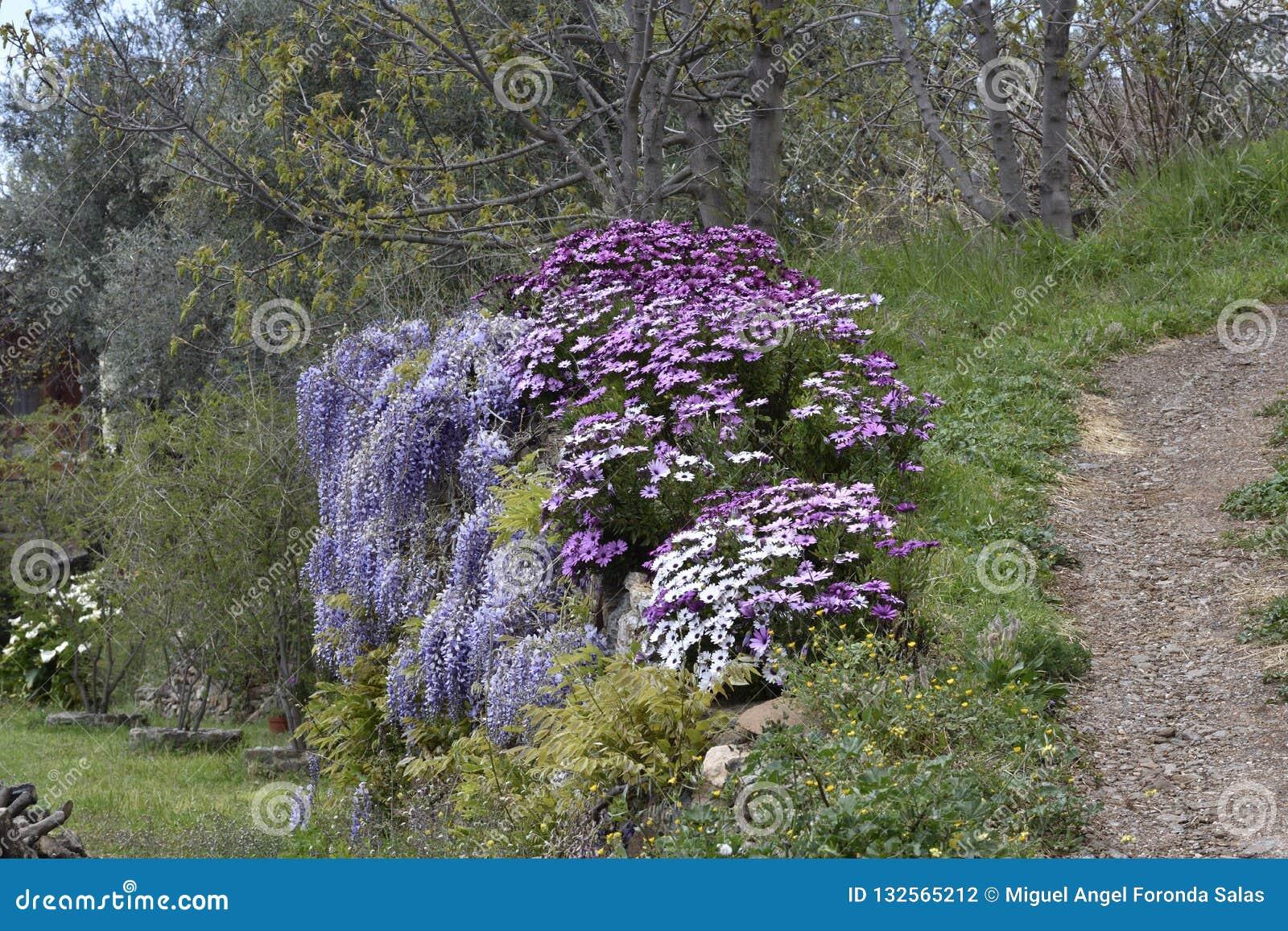 Vit purpurfärgad blomma som hänger på en vägvägg