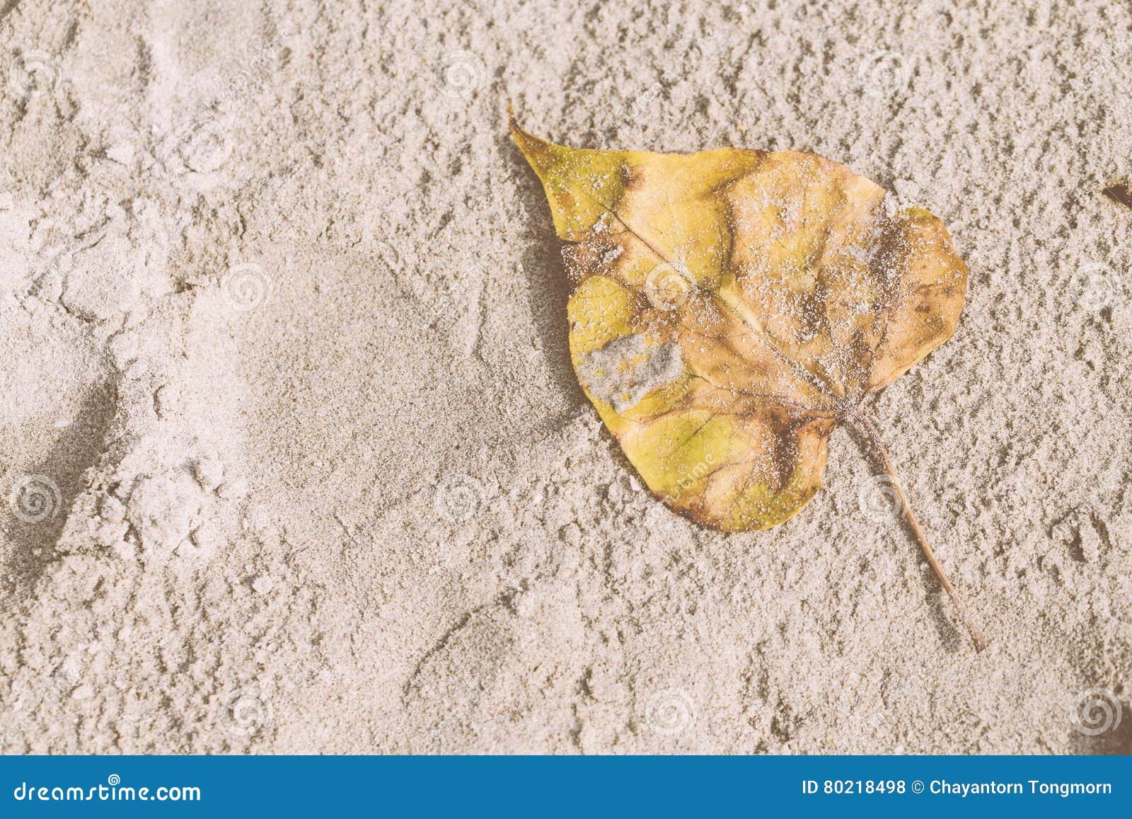 Vit sand och torrt blad för guling på stranden på middagen för att semestern ska koppla av bakgrund Inte gör de ser smaskiga thai
