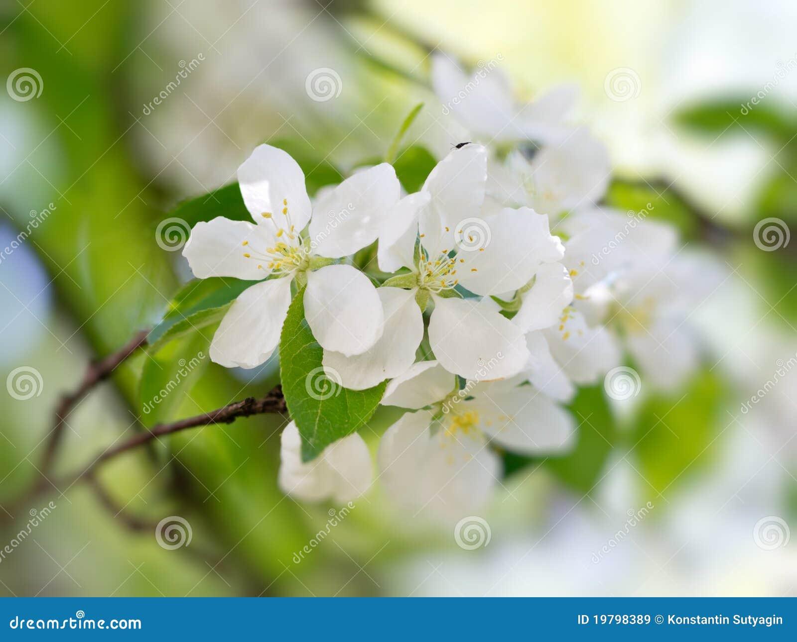 Vita blommas blommor