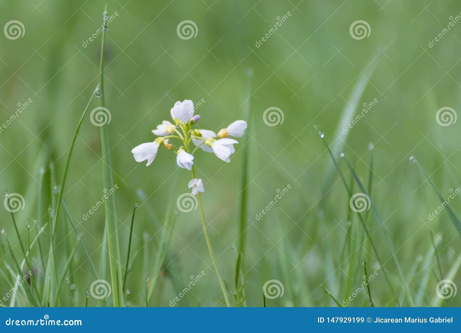 Vita blommor i gr?s vitt wild f?r blomma