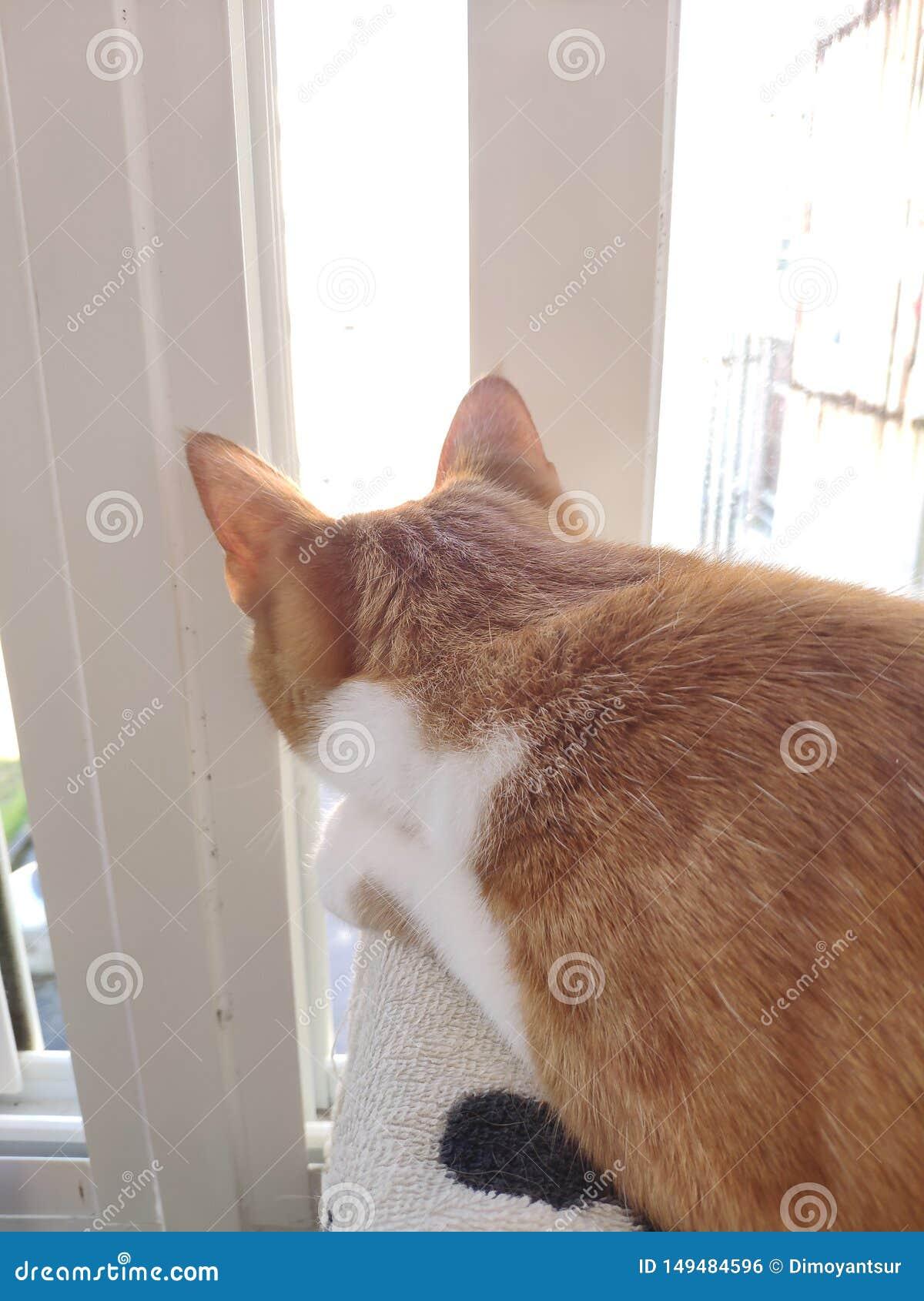 Vita del gatto