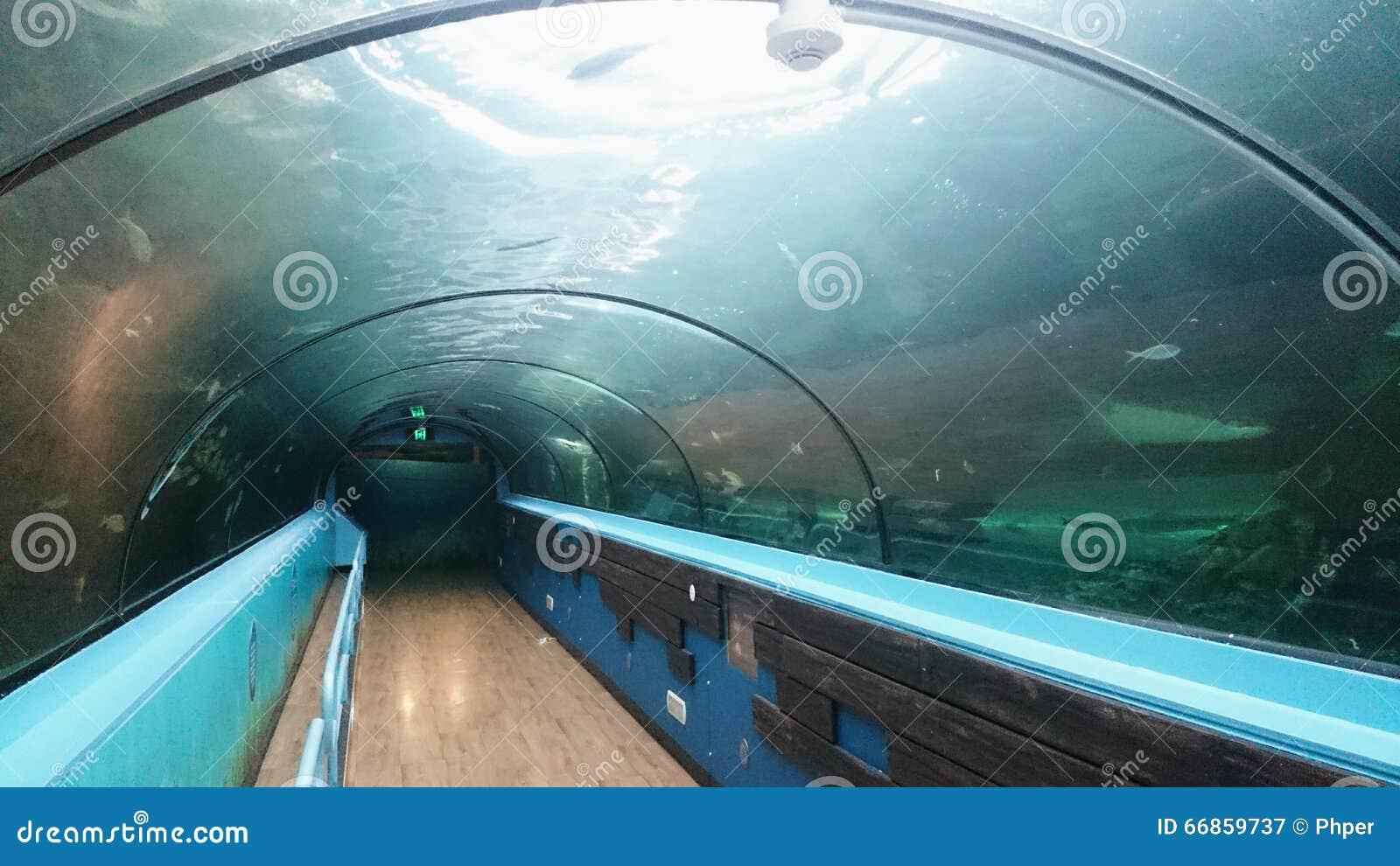 Vita di mare del corridoio dell acquario @ Sydney Aquarium