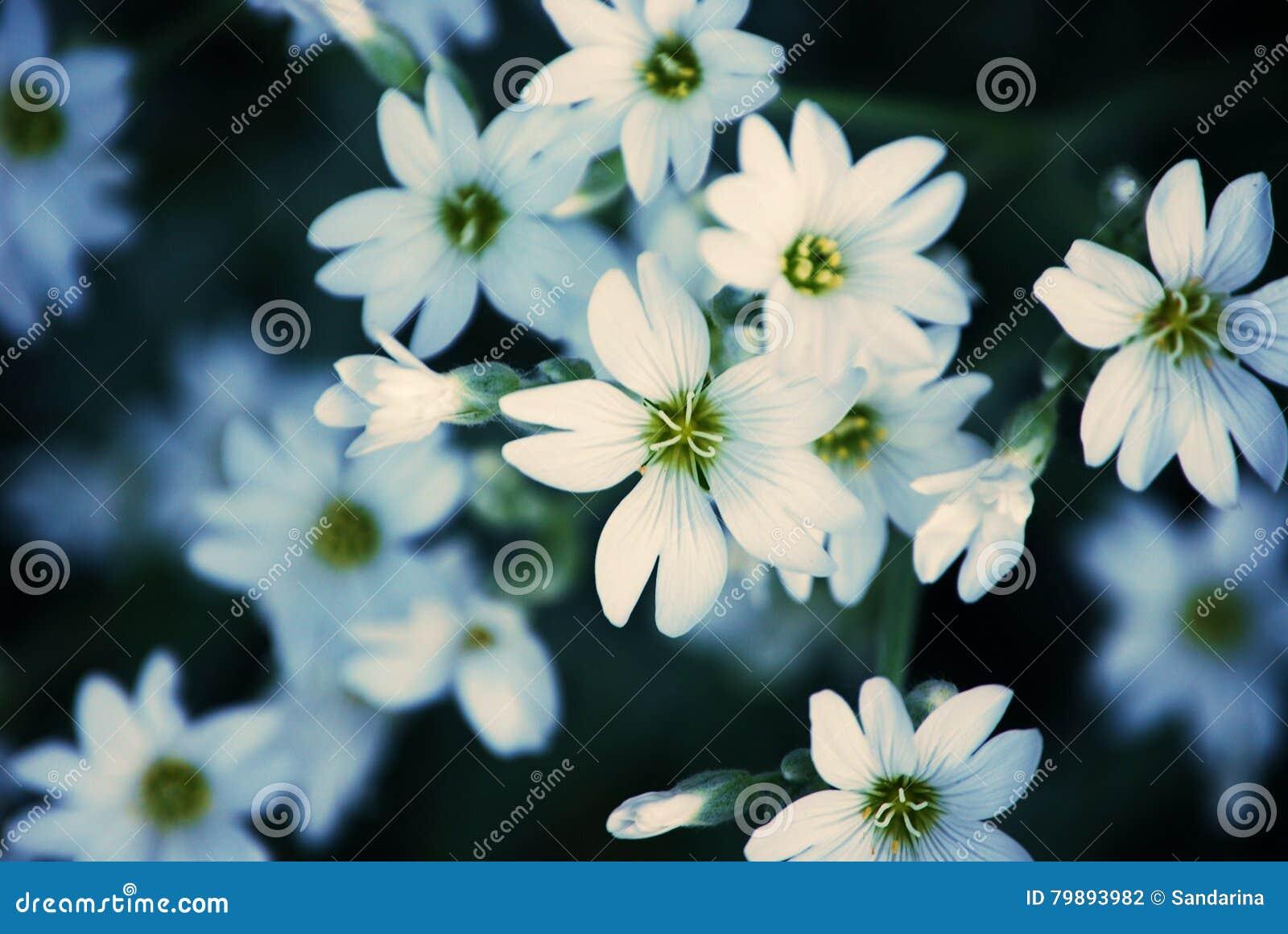 vita blommor bilder