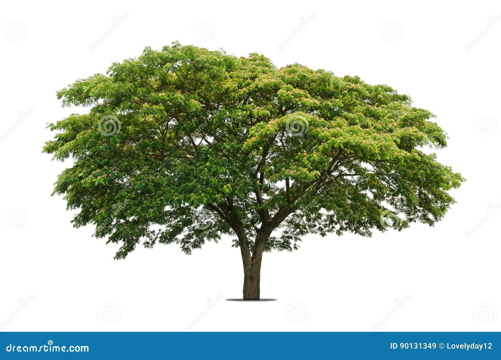 Vita isolerade trees
