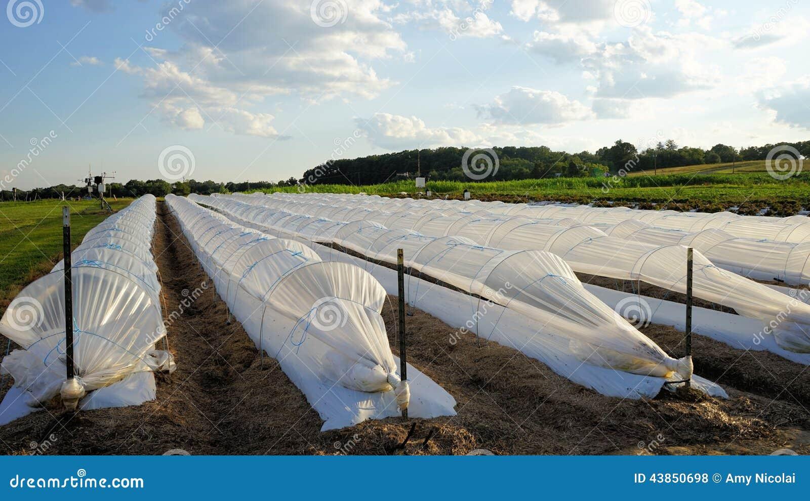 Vita plast- radräkningar i fält