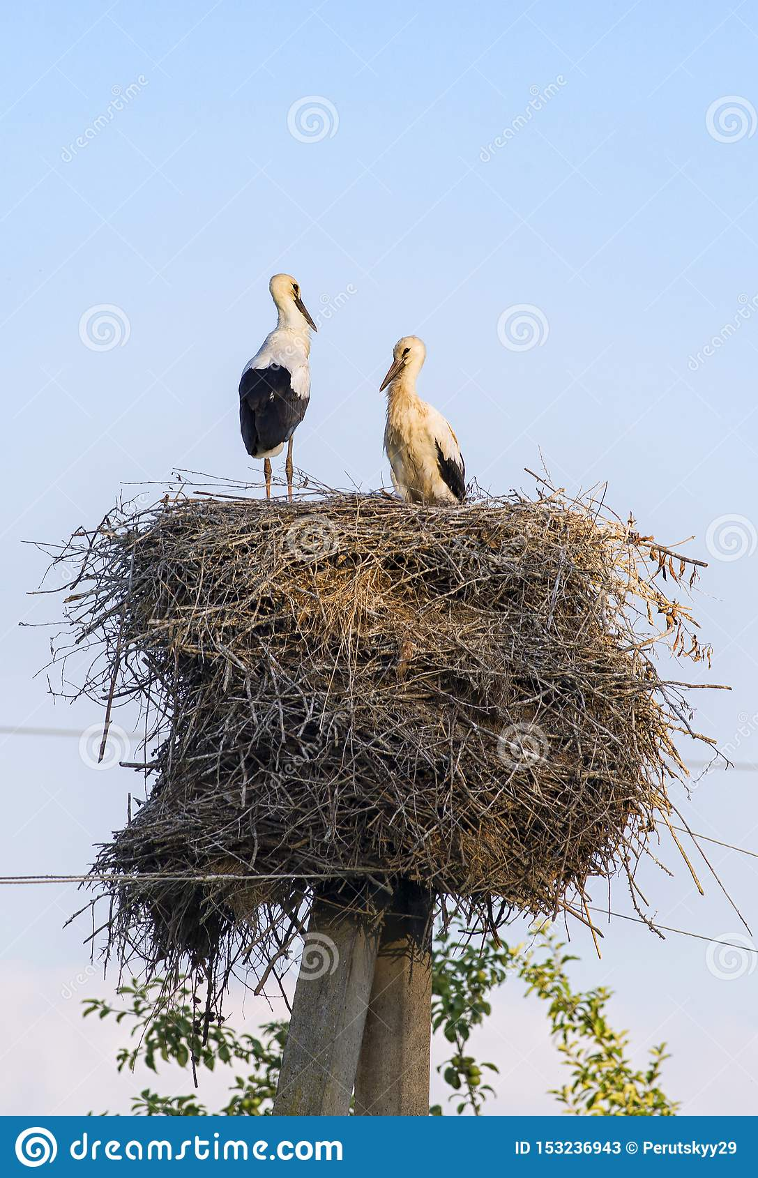 Vita storks