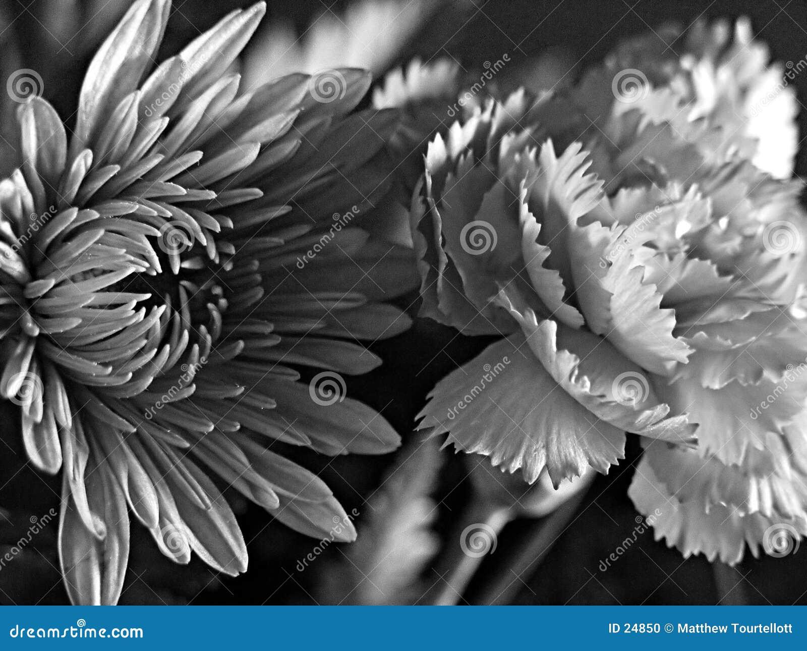 Vita svarta fina blommor för konst