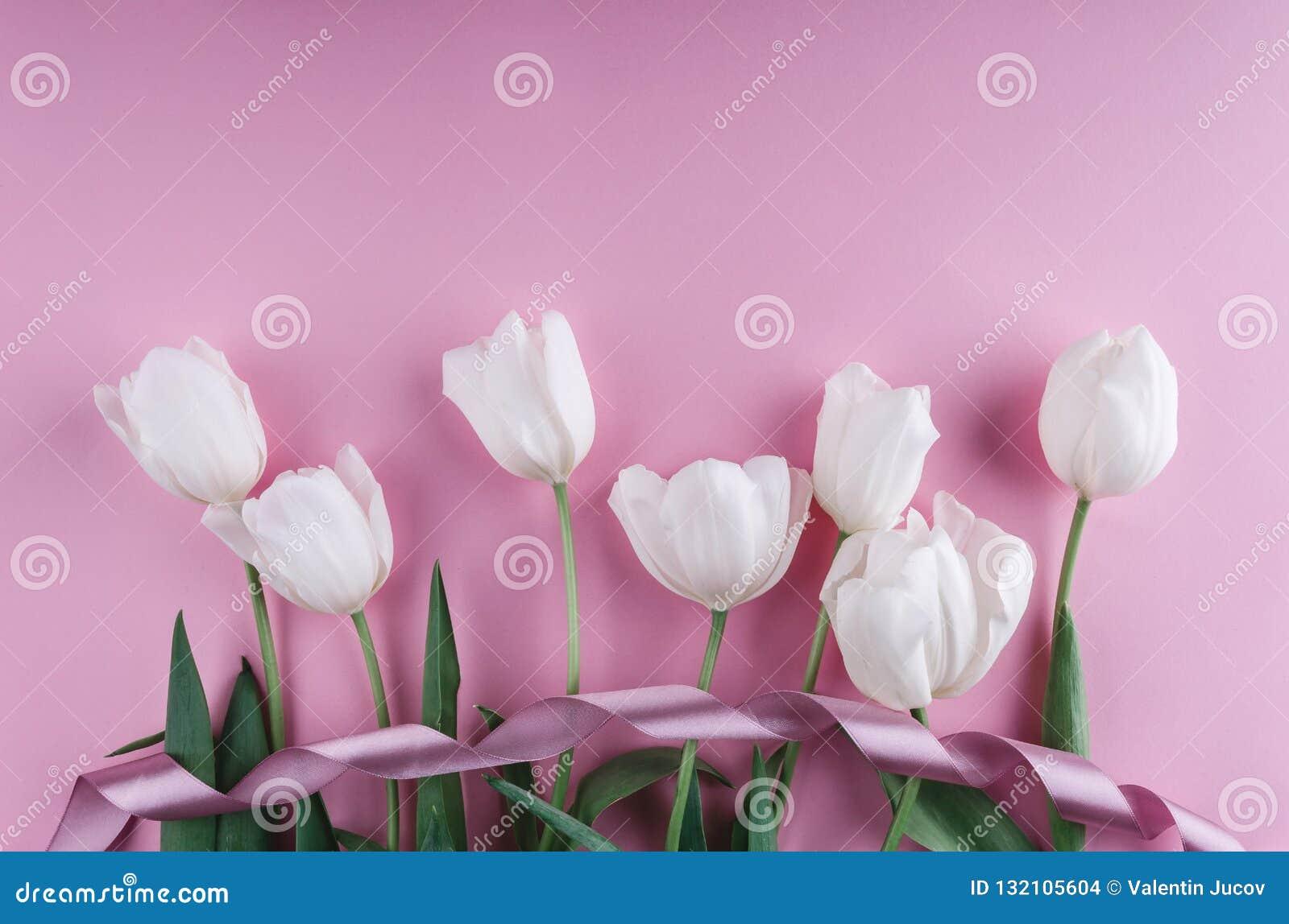 Vita tulpan blommar över ljus - rosa bakgrund Hälsningkort eller bröllopinbjudan