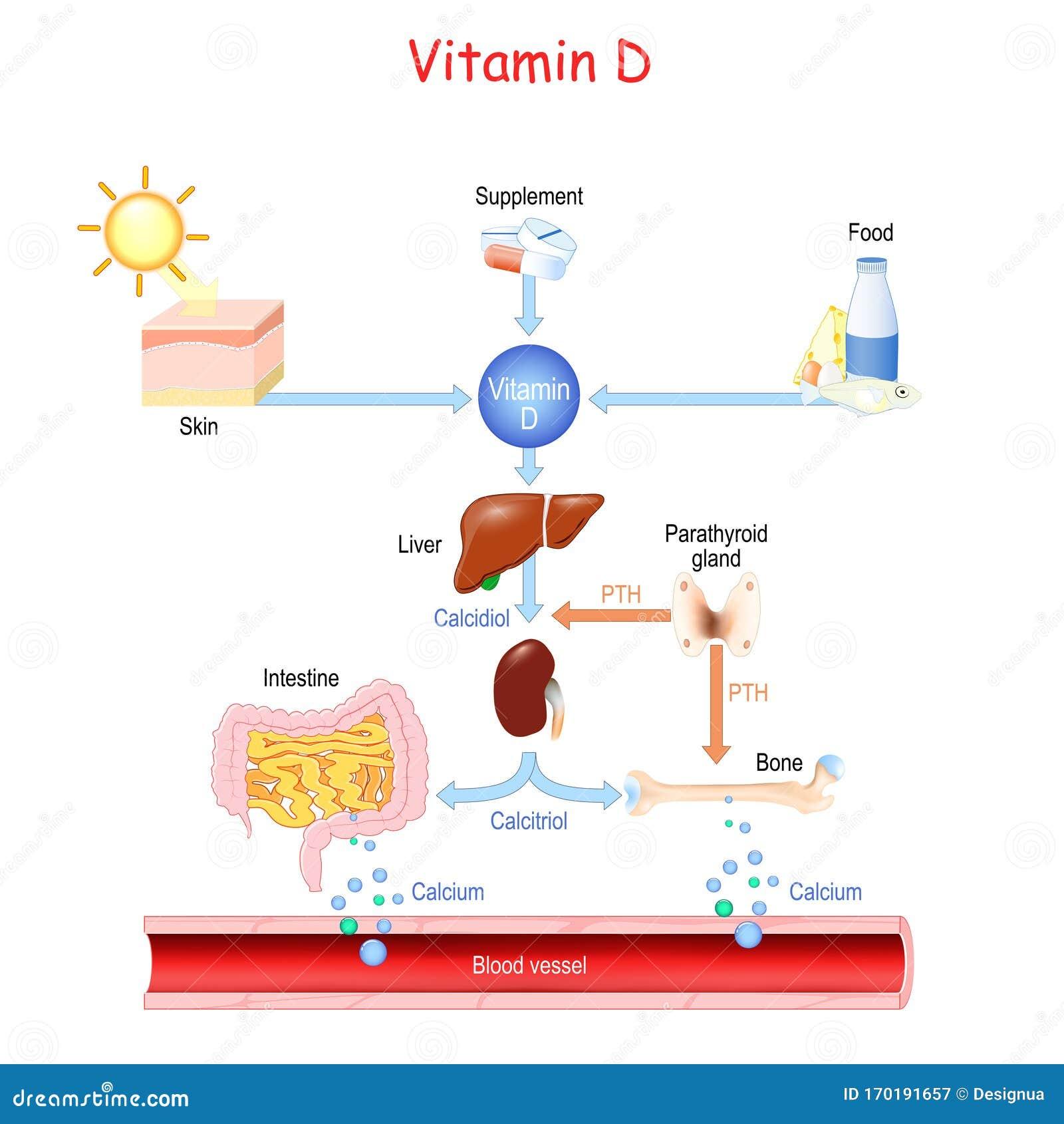 Vitamin D Im Blut