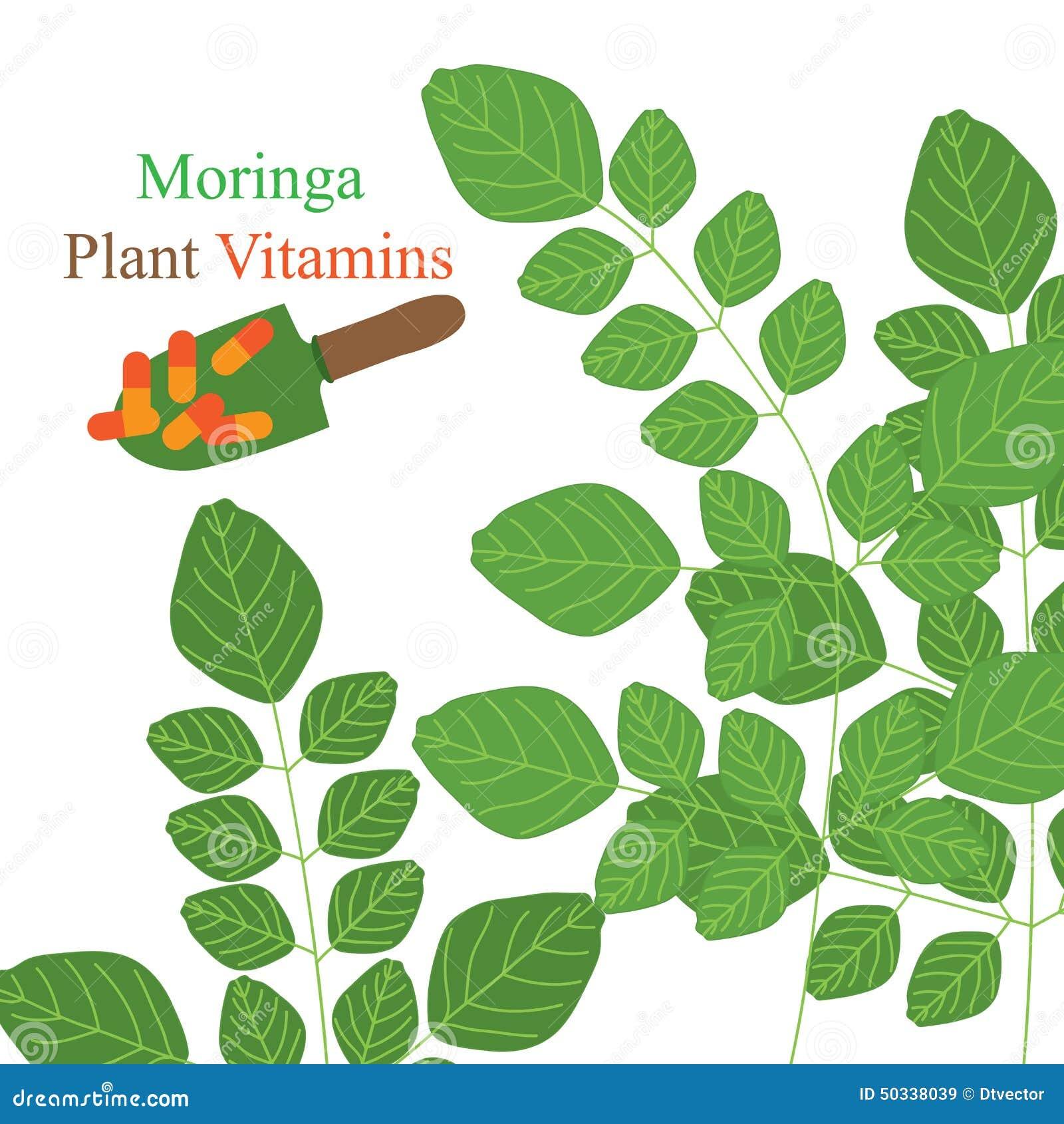 Vitaminas da planta de Moringa