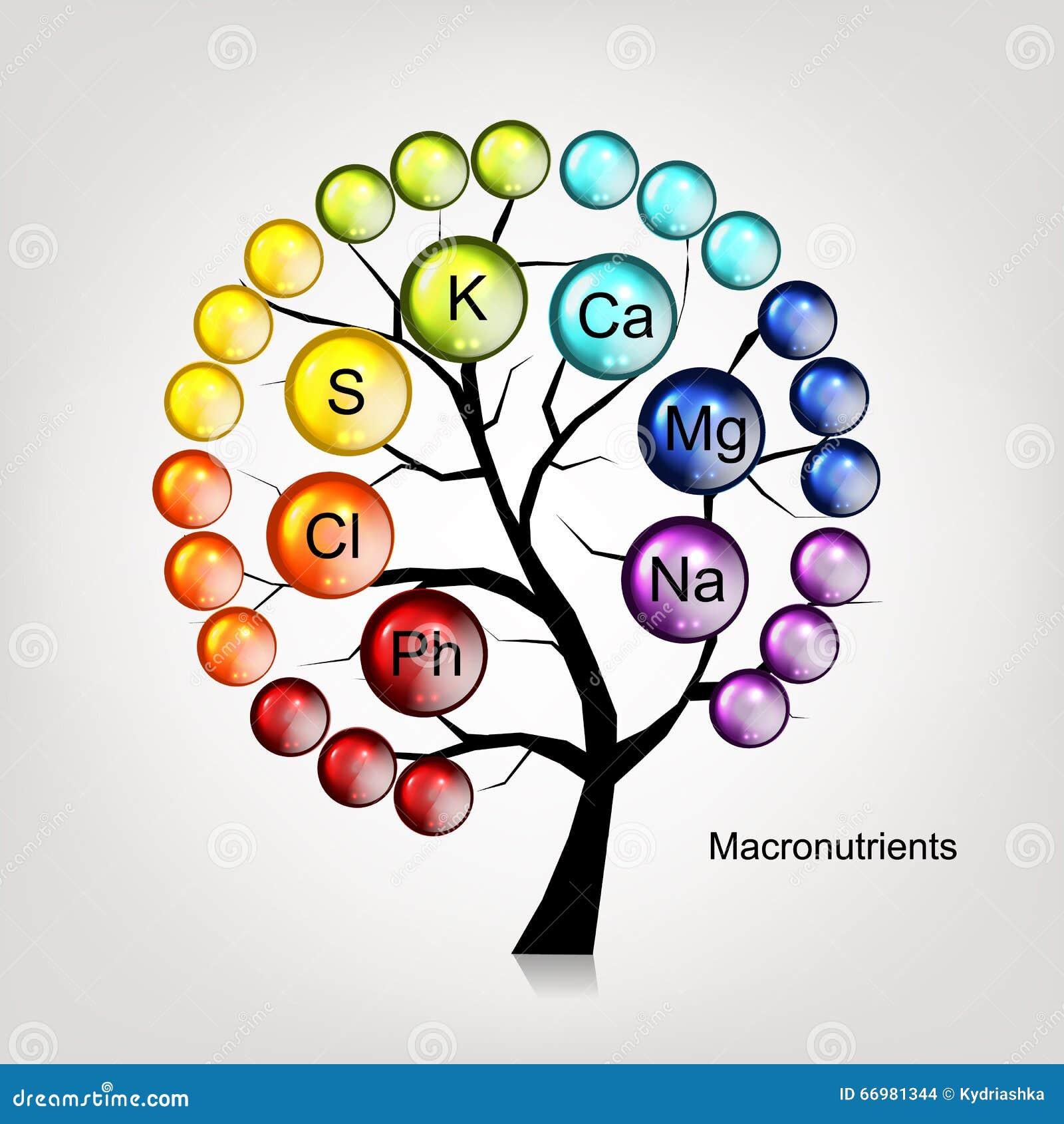Vitaminbaumkonzept für Ihr Design