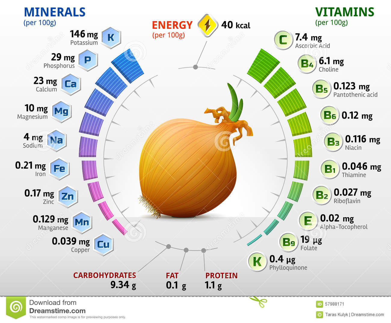 Vitamins And Minerals Of Common Onion Stock Vector - Image