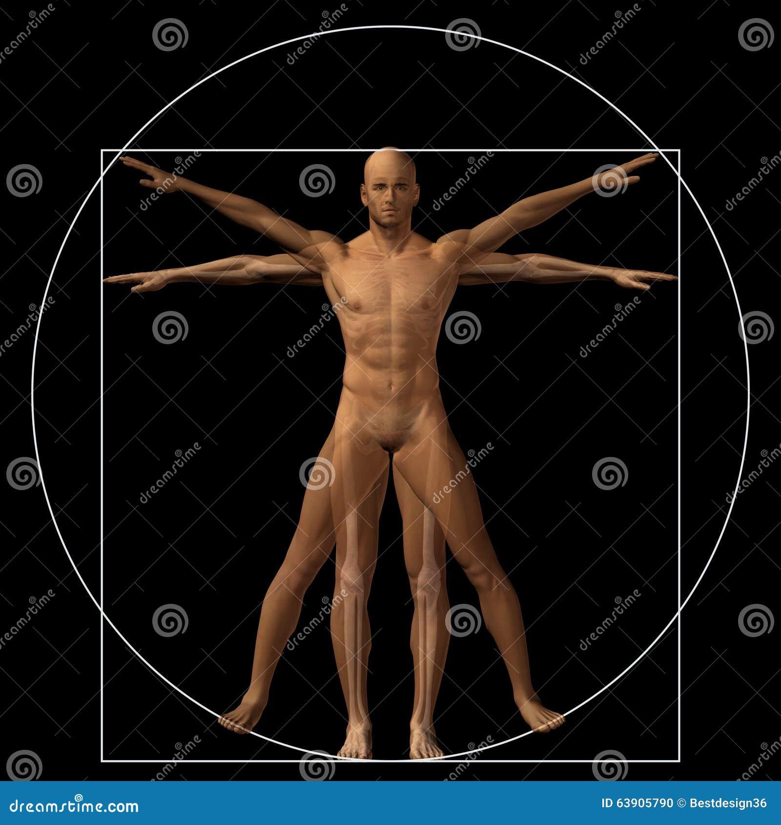 Vitruvian Human Or Man Conceptual 3d Proportion Anatomy Body Stock ...