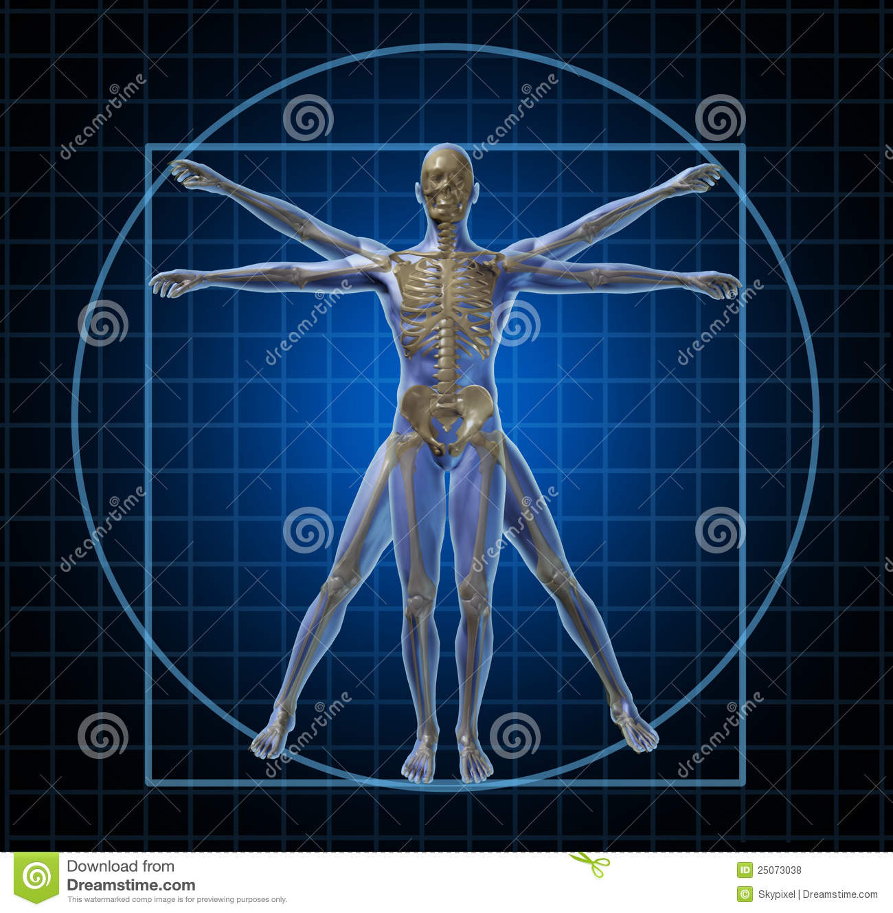 Vitruvian Human Skeleton Man Stock Illustration