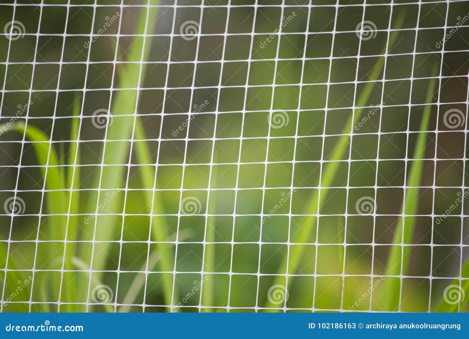 Vitt ingrepp och grönt gräs