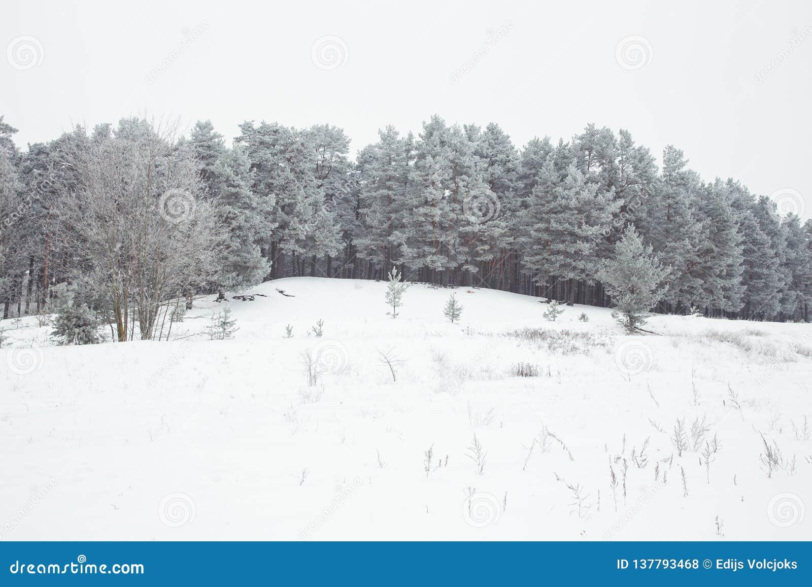 Vitt och kallt trä Många snöar på vintern 2019
