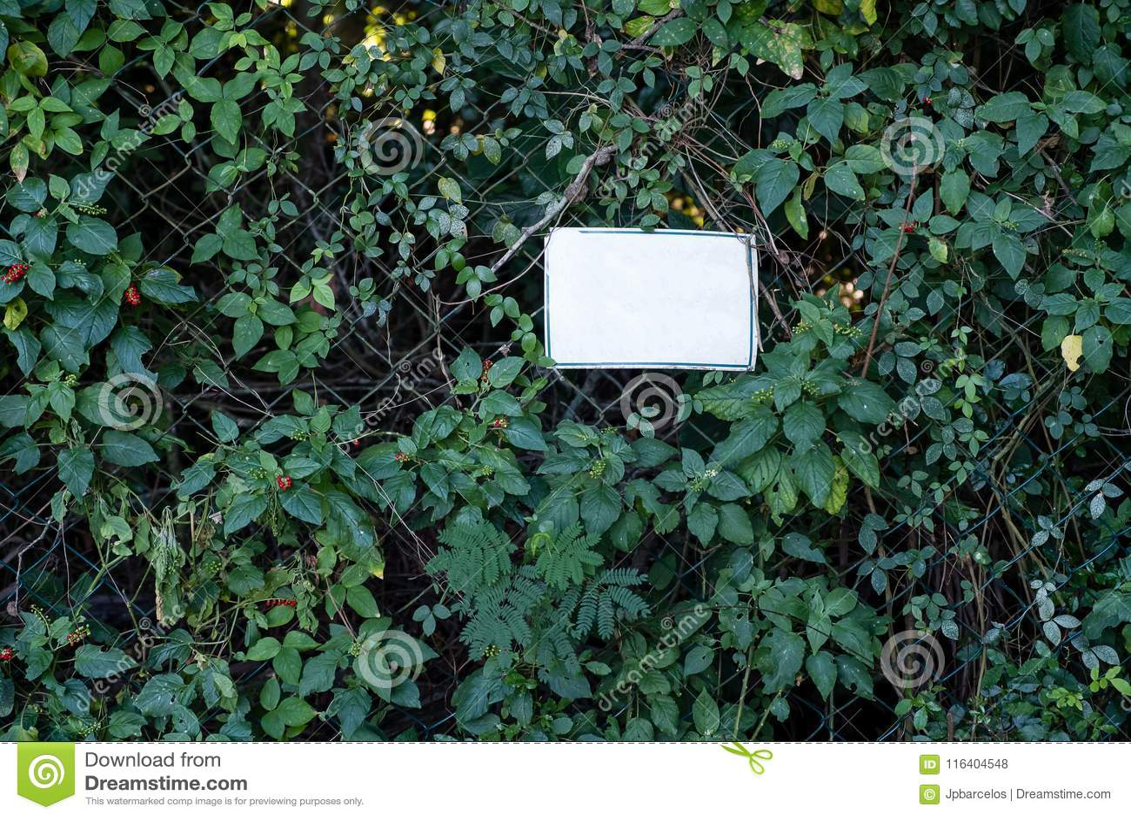 Vitt tecken för tomt medel på det metalliska staketet som täckas med vegetation