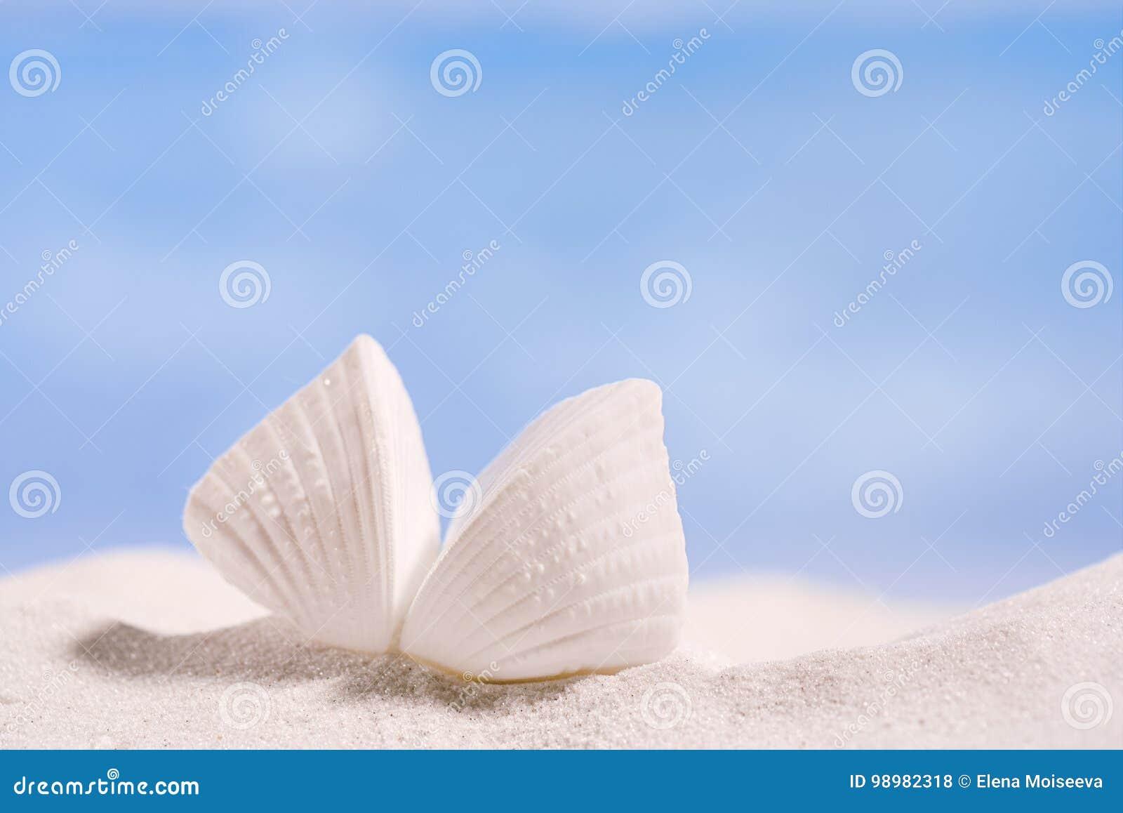 Vitt tropiskt skal på vit Florida strandsand under solljus