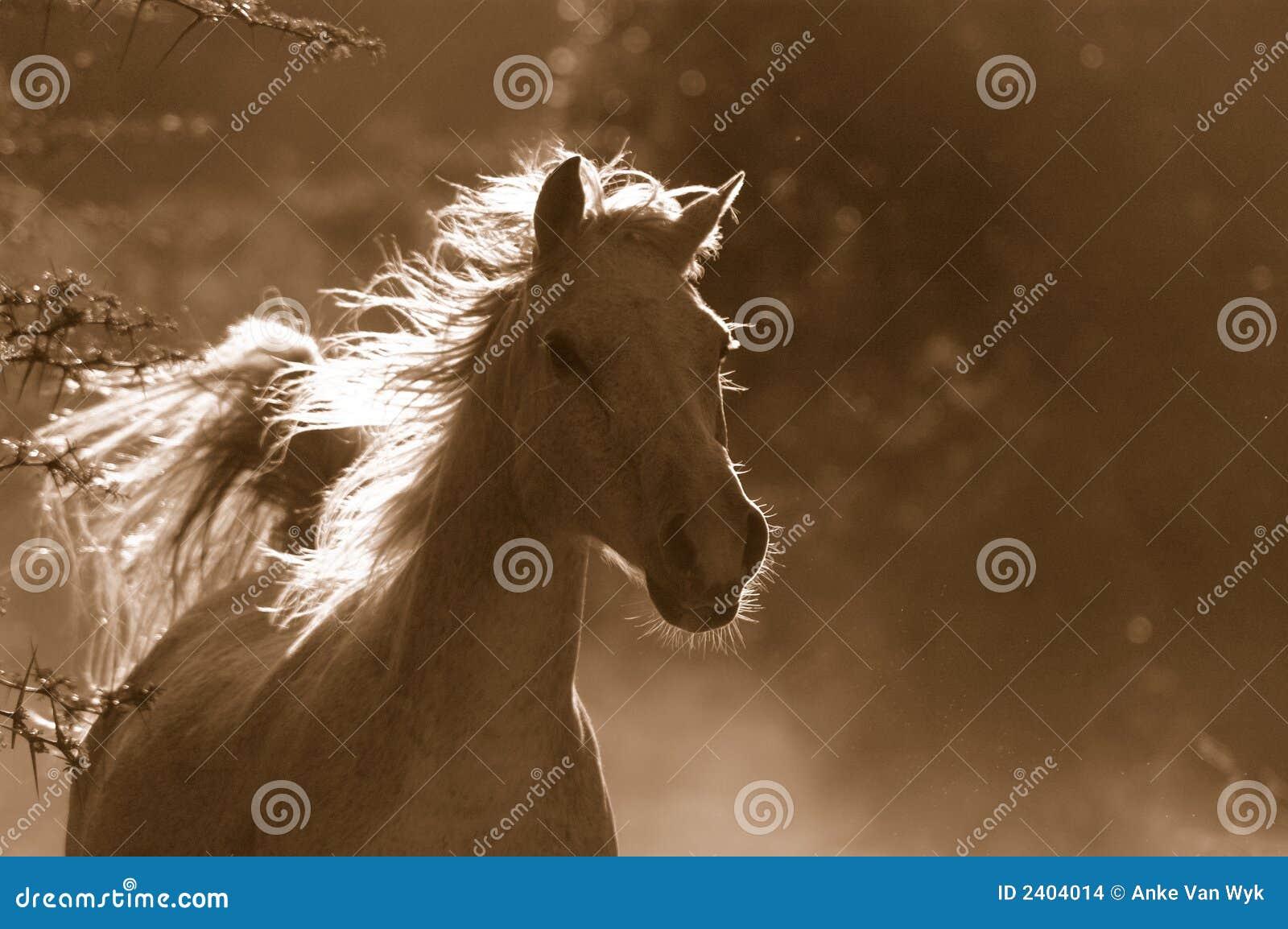Vitt wild för häst
