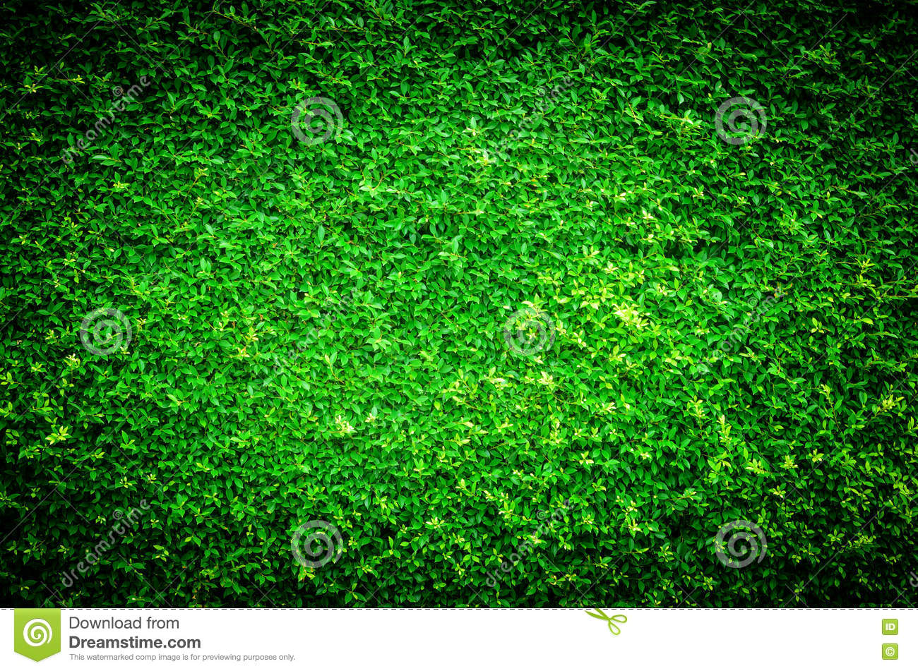 Vivid And Dark Nature Green Leaf Background Texture Stock ...