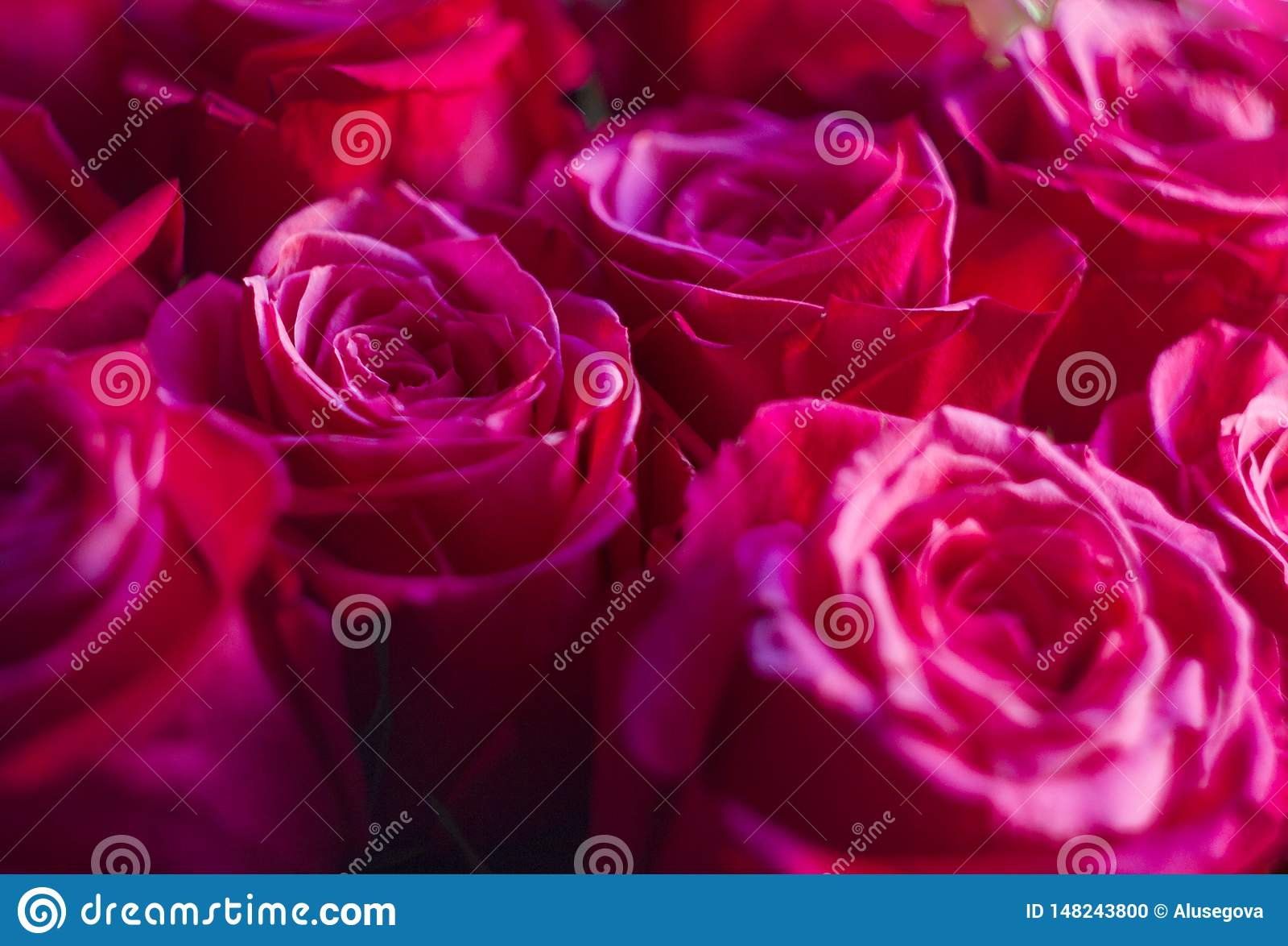 Vivid pink roses bouquet close-up
