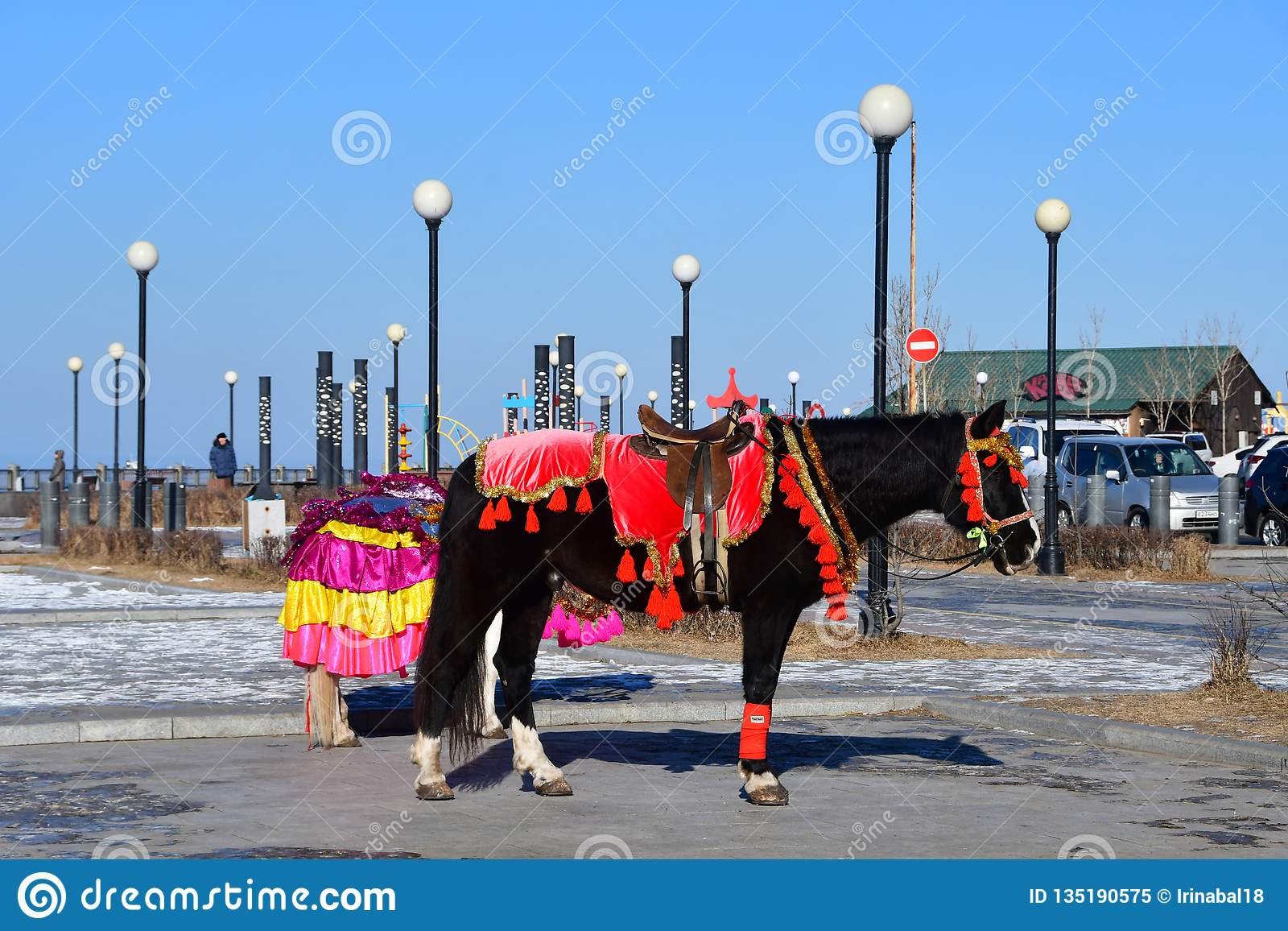 Vladivostok Horse