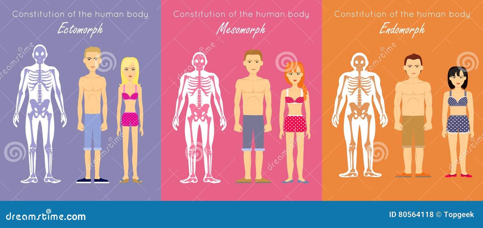 Vlak het Ontwerp Vectorconcept van de menselijk Lichaamsgrondwet