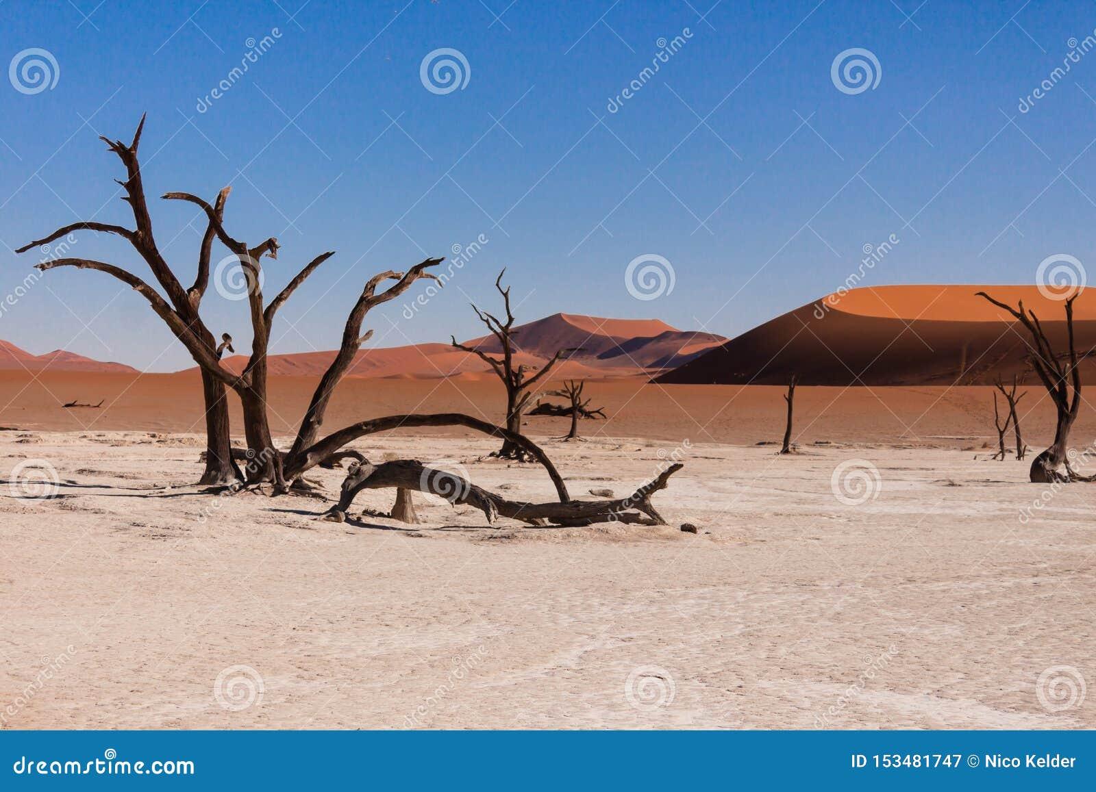 Vlei mort, la vallée morte dans le sossusvlei, Namibie