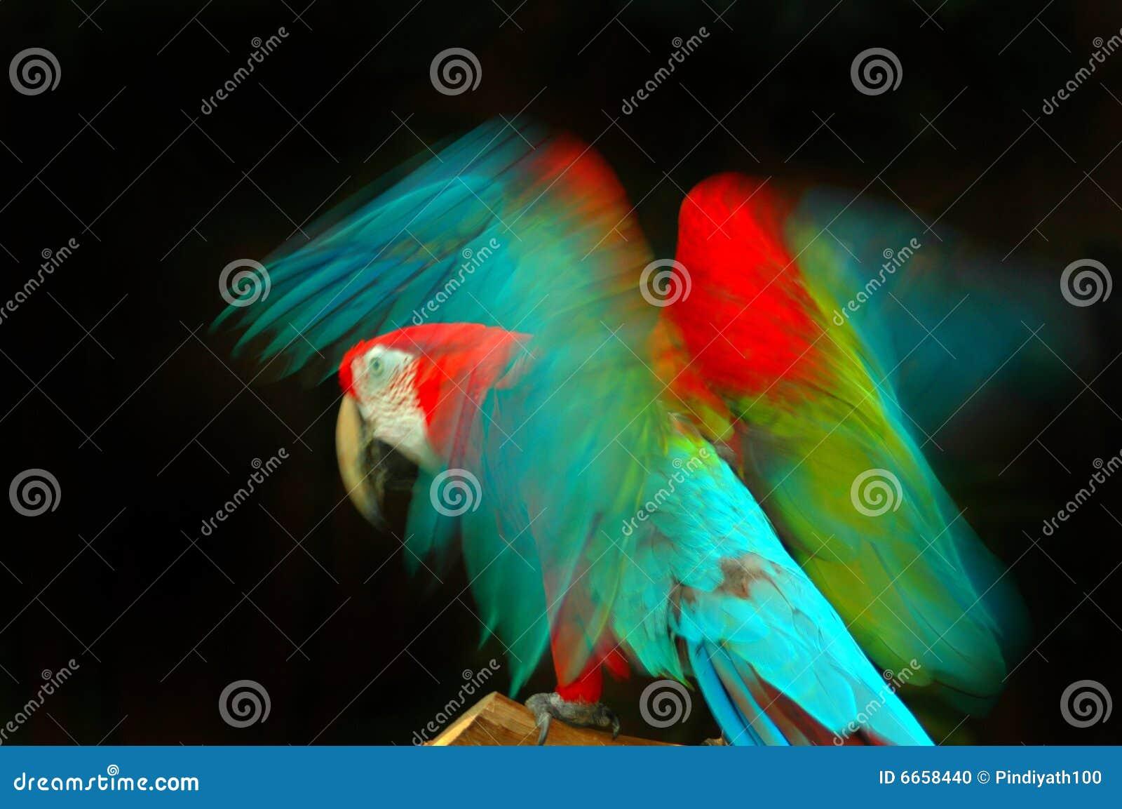 Vleugels in Motie