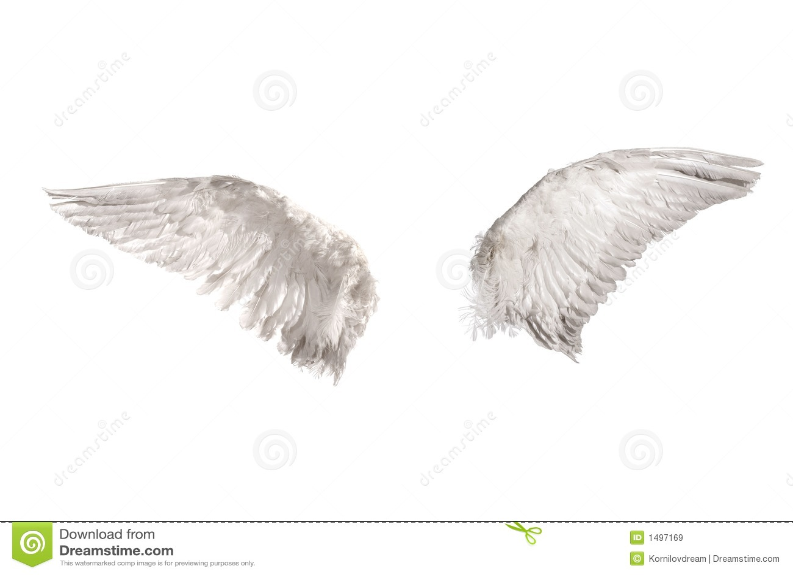 Vleugels over wit
