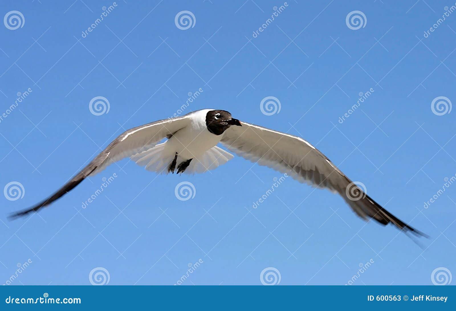 Vleugels van Vlucht