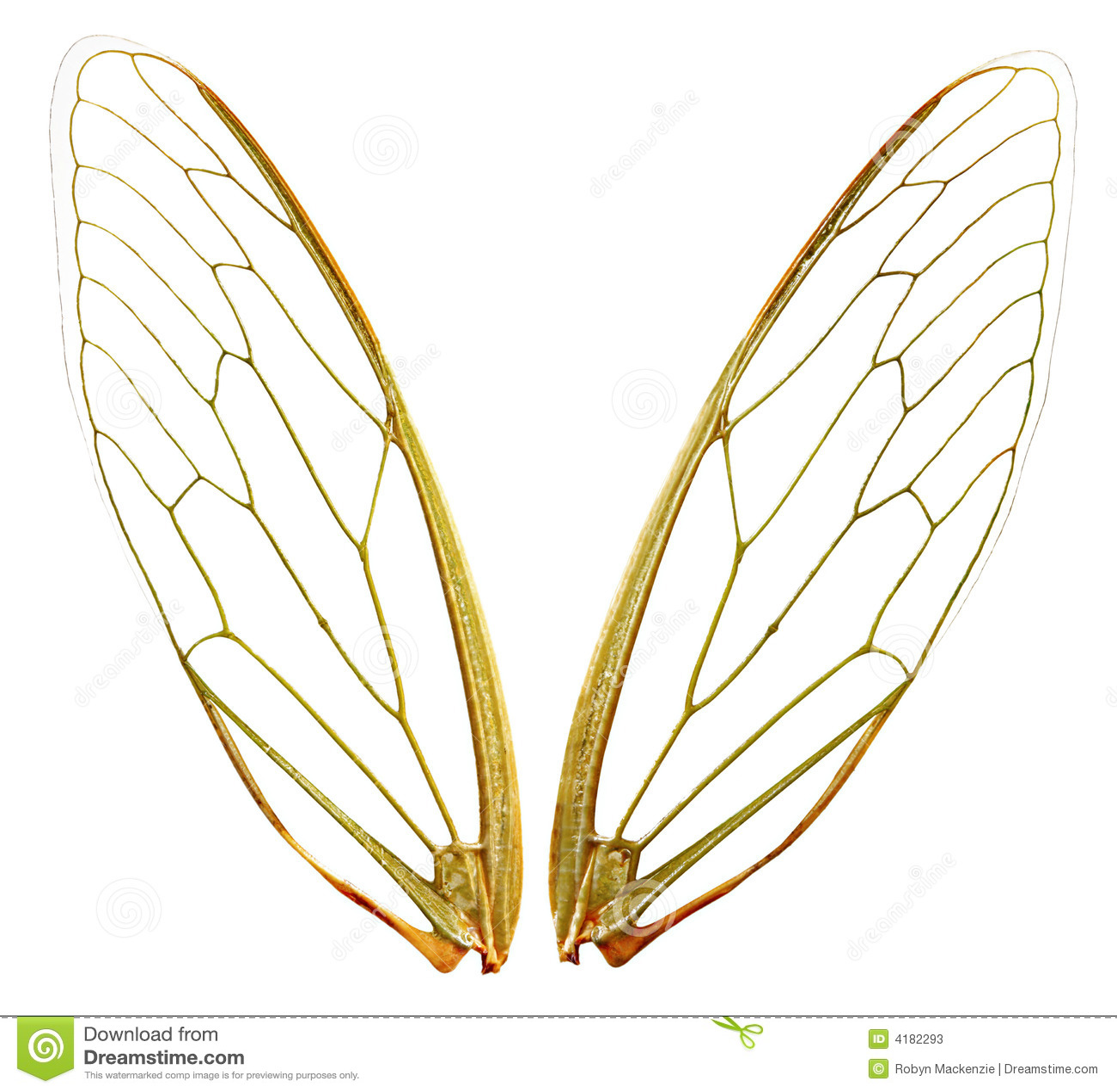 Vleugels (wth Weg)