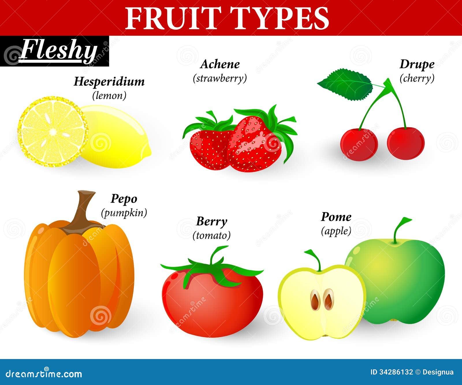 Vlezige fruittypes