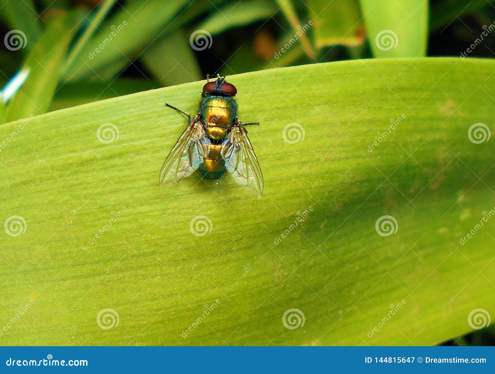 Vlieg op heldergroen blad