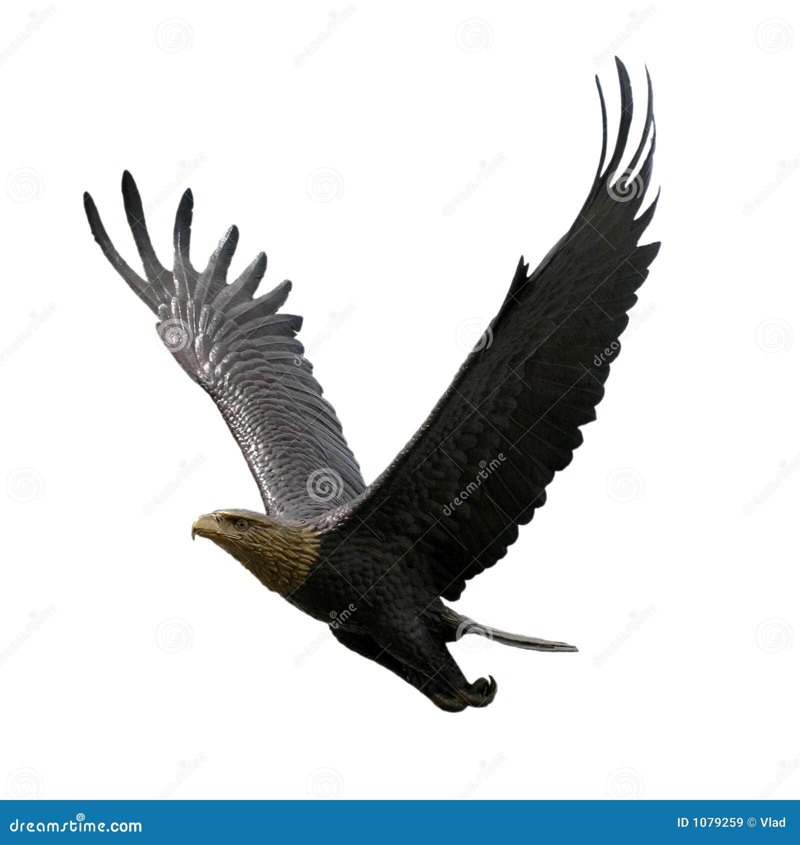 vliegende adelaar stock afbeelding afbeelding bestaande