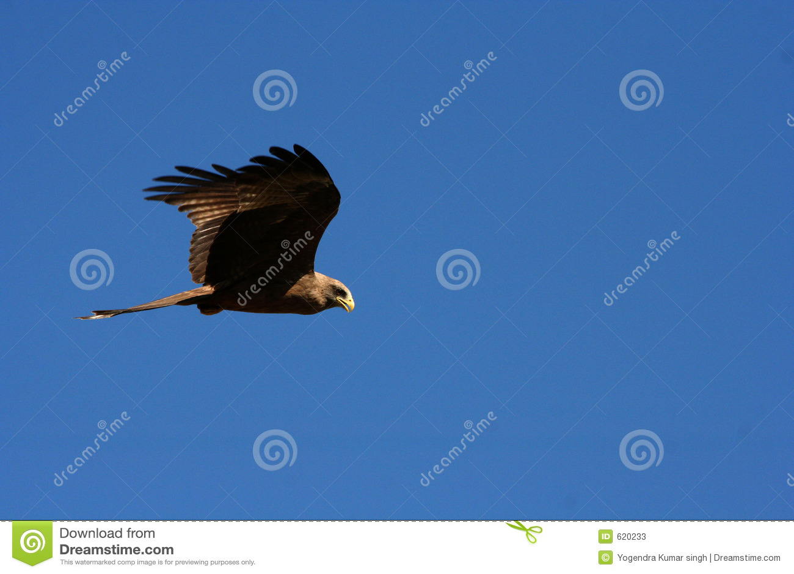 Vliegende adelaar