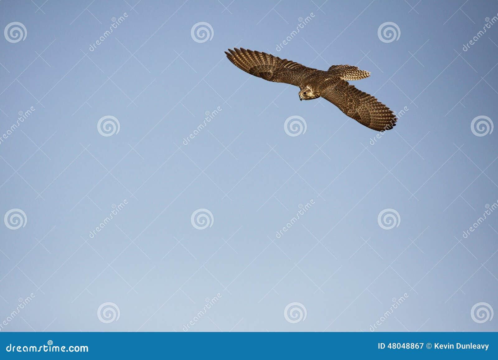 Vliegende Valk