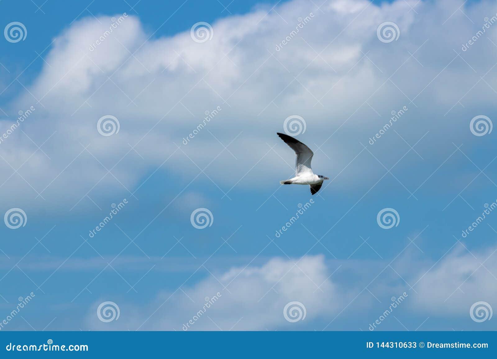 Vliegende vogel in de hemel
